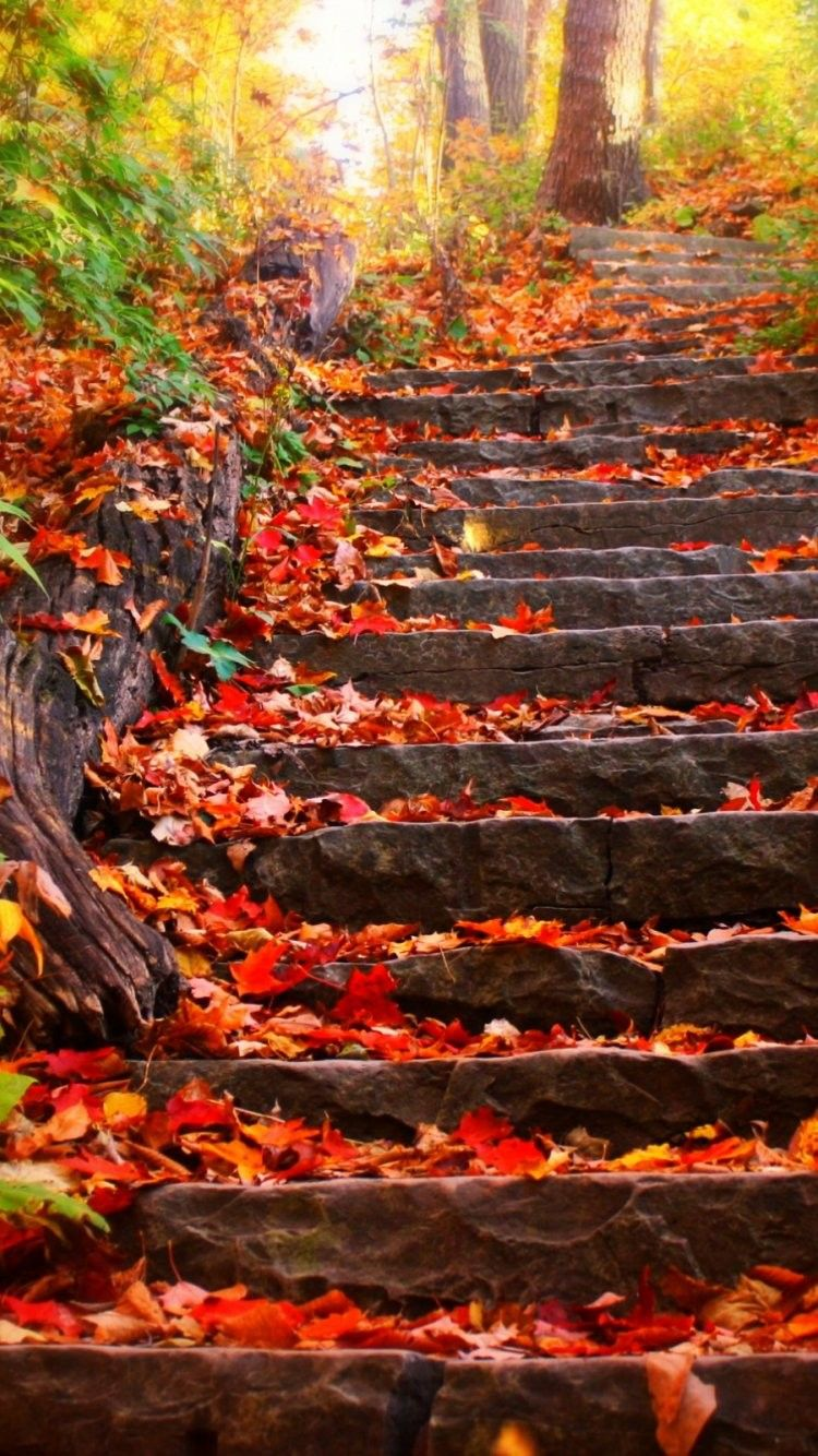 Autumn iPhone 6 Plus Wallpapers , Top Free Autumn iPhone 6