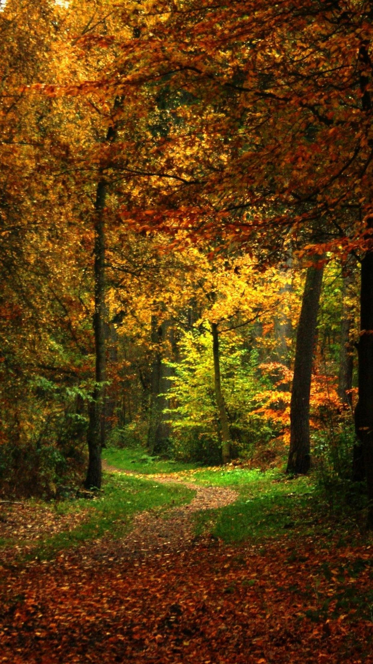 Autumn iPhone 6 Plus Wallpapers - Top Free Autumn iPhone 6 ...