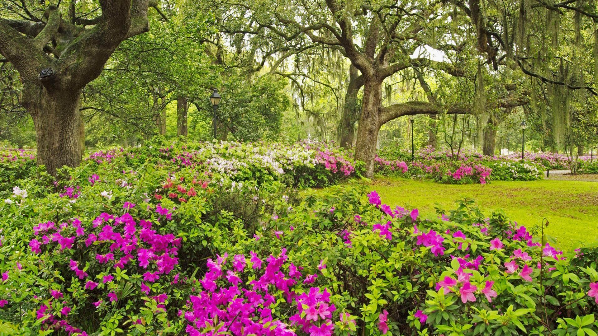 45 Best Free Flower Garden Desktop Wallpapers Wallpaperaccess