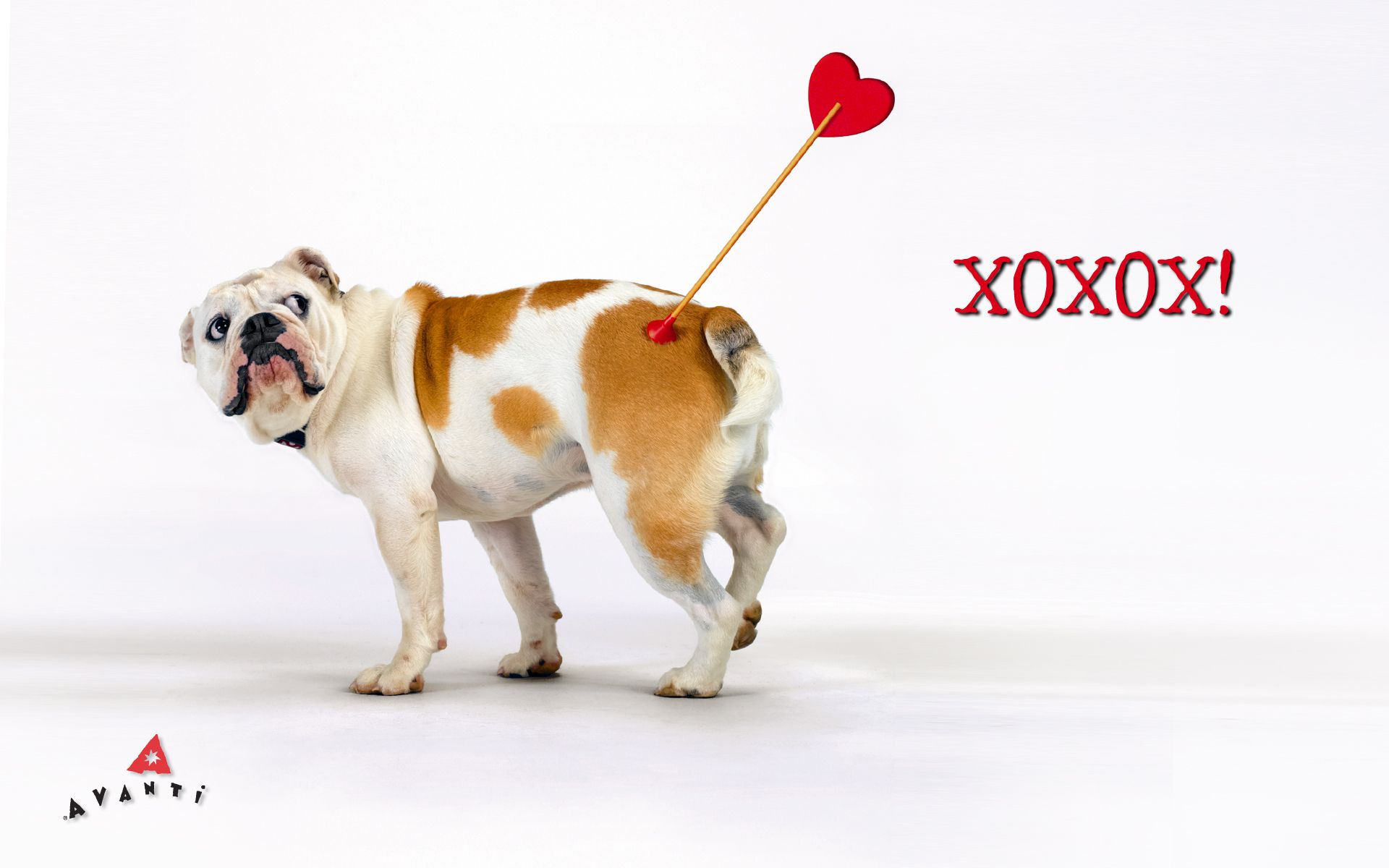 40 Best Free Valentine Dog Wallpapers Wallpaperaccess