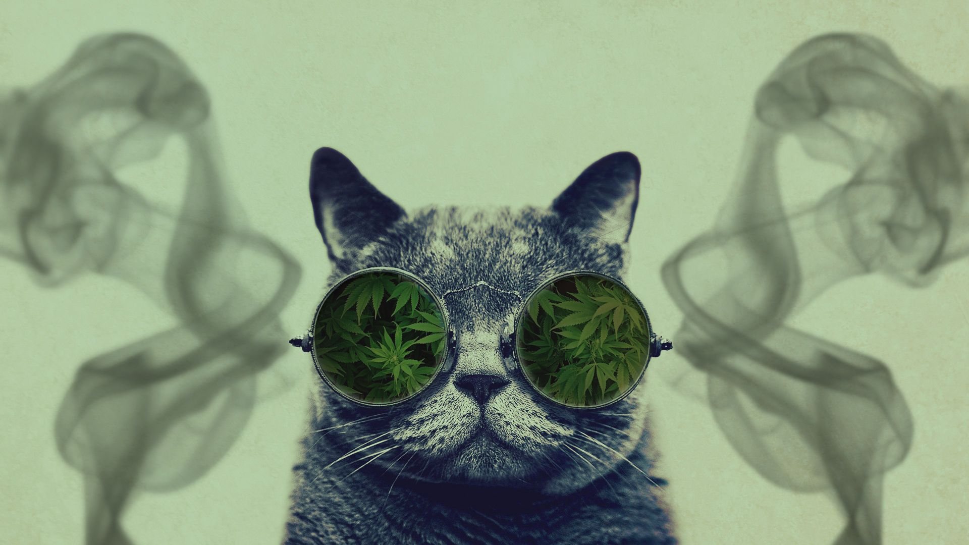 Cat With Galaxy Glasses Wallpaper Hd Www Bilderbeste Com