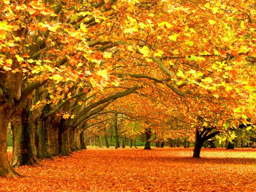 Fall Nature Wallpapers - Top Free Fall Nature Backgrounds