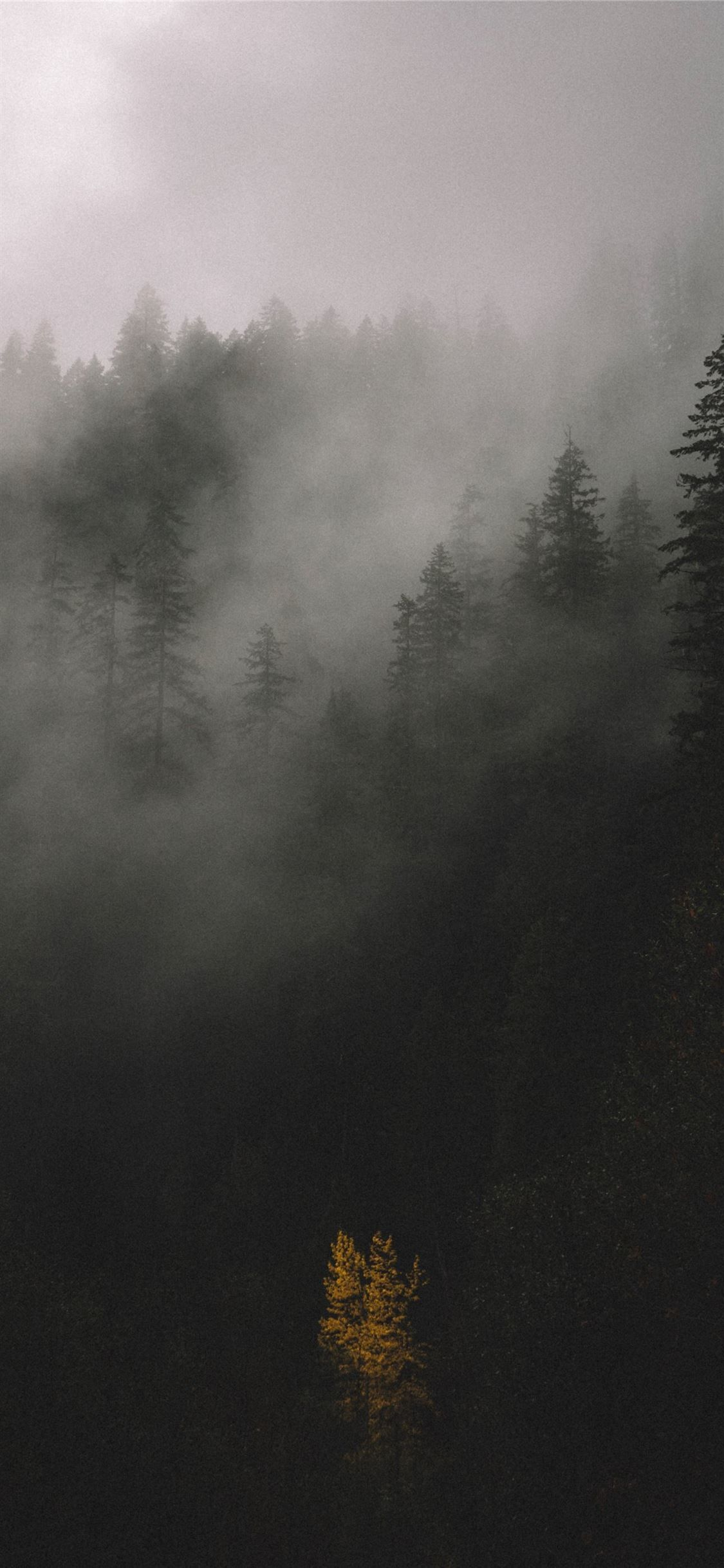 Grey Forest Wallpapers - Top Free Grey ...