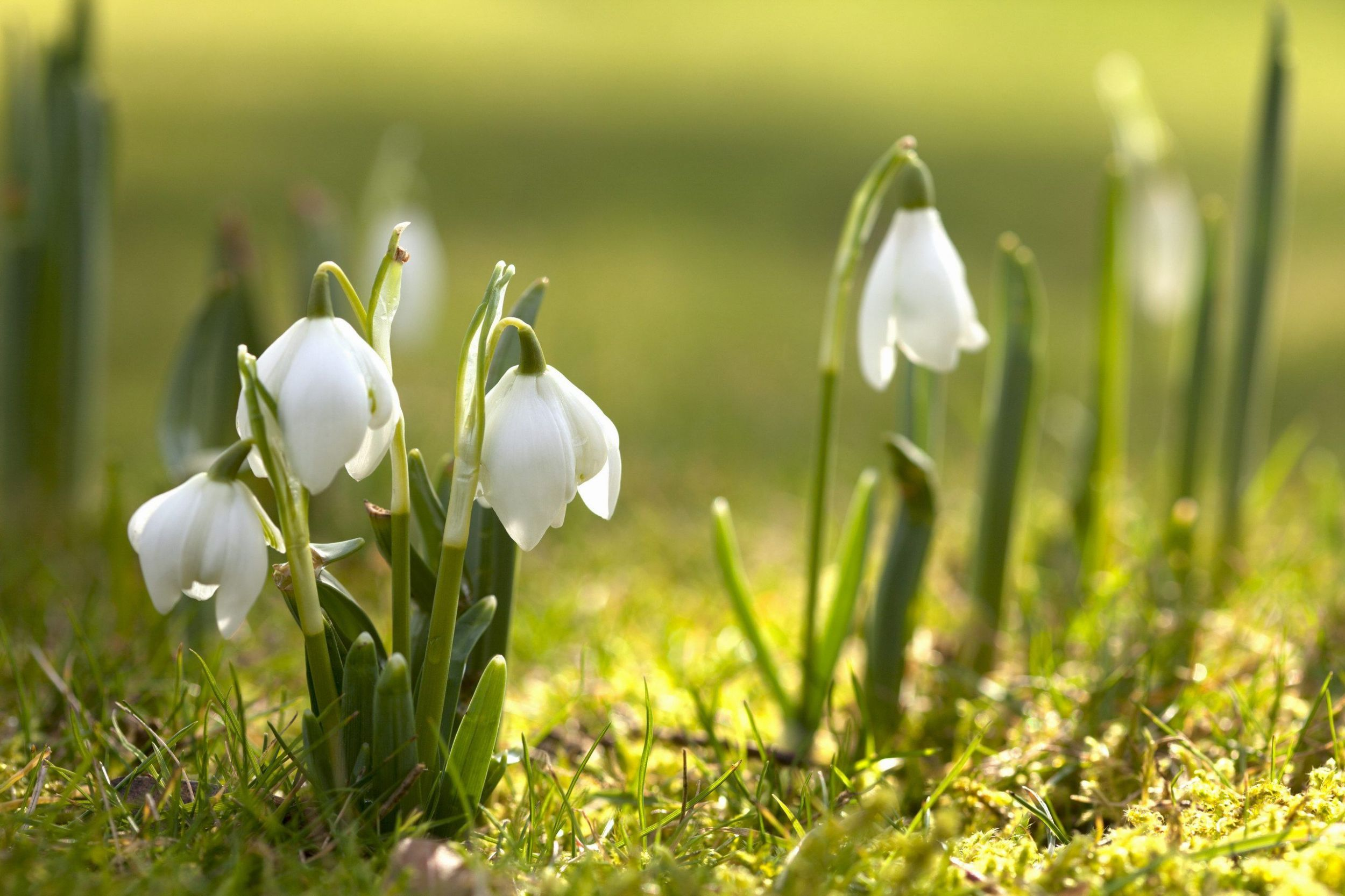 Spring Computer Wallpapers Top Free Spring Computer Backgrounds