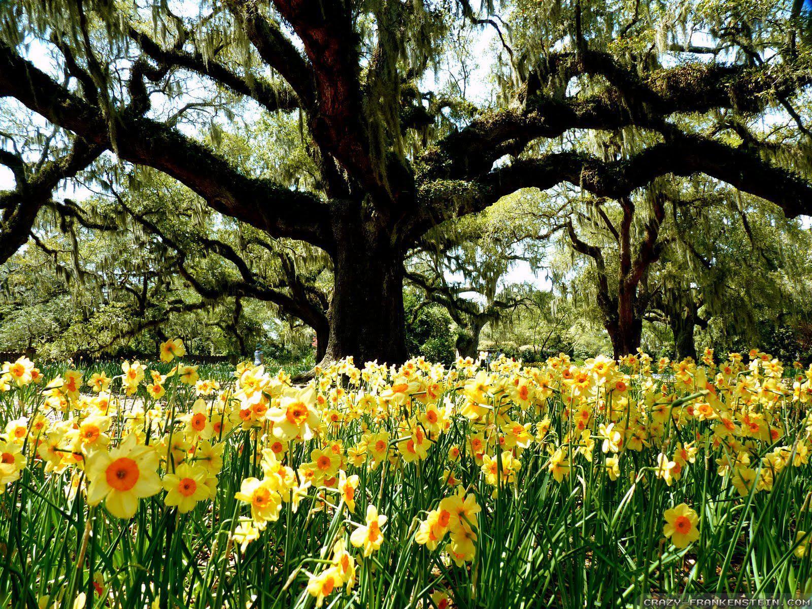 Spring Desktop Wallpapers Top Free Spring Desktop Backgrounds