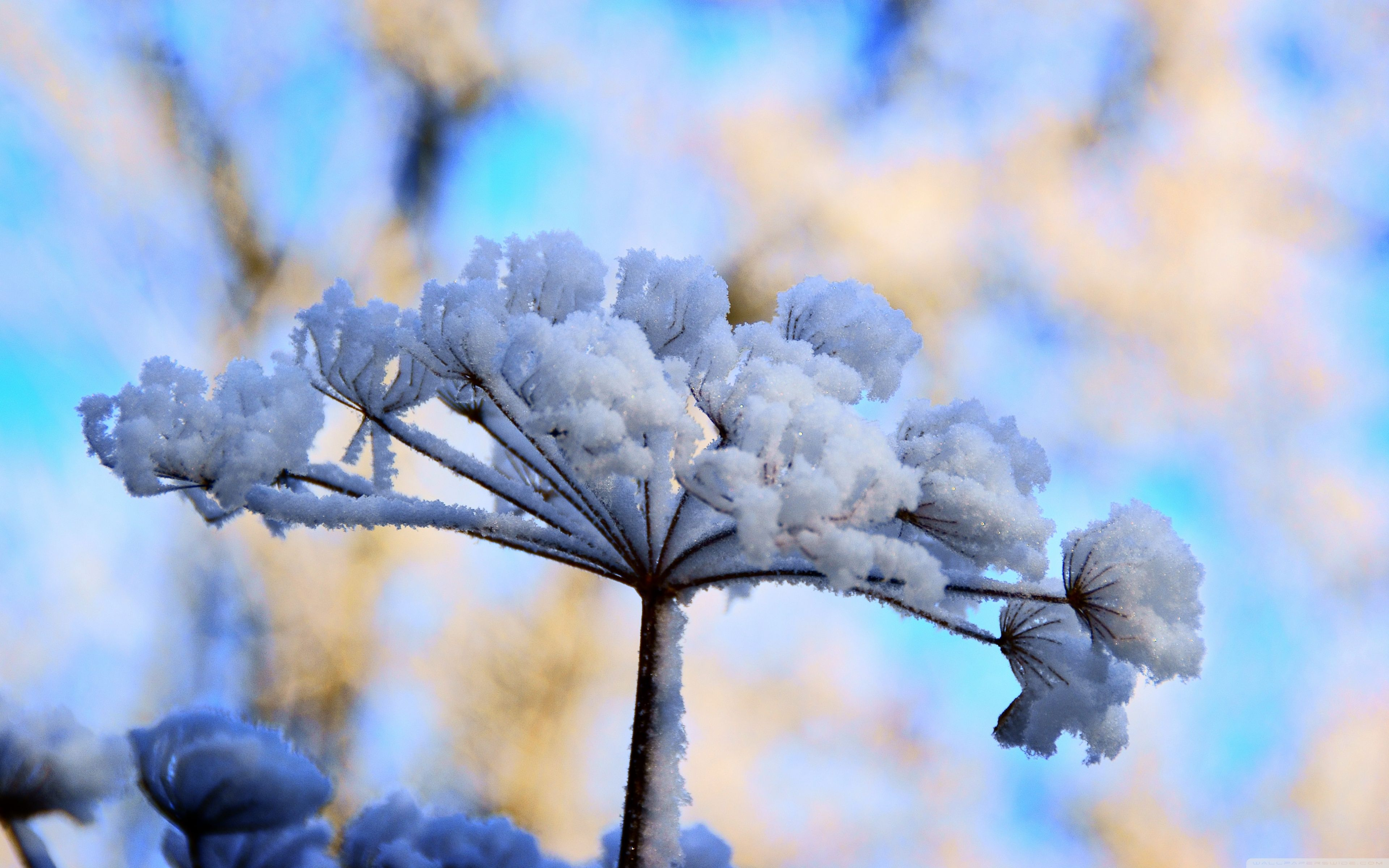 Flowers In Snow Wallpapers Top Free Flowers In Snow Backgrounds Wallpaperaccess
