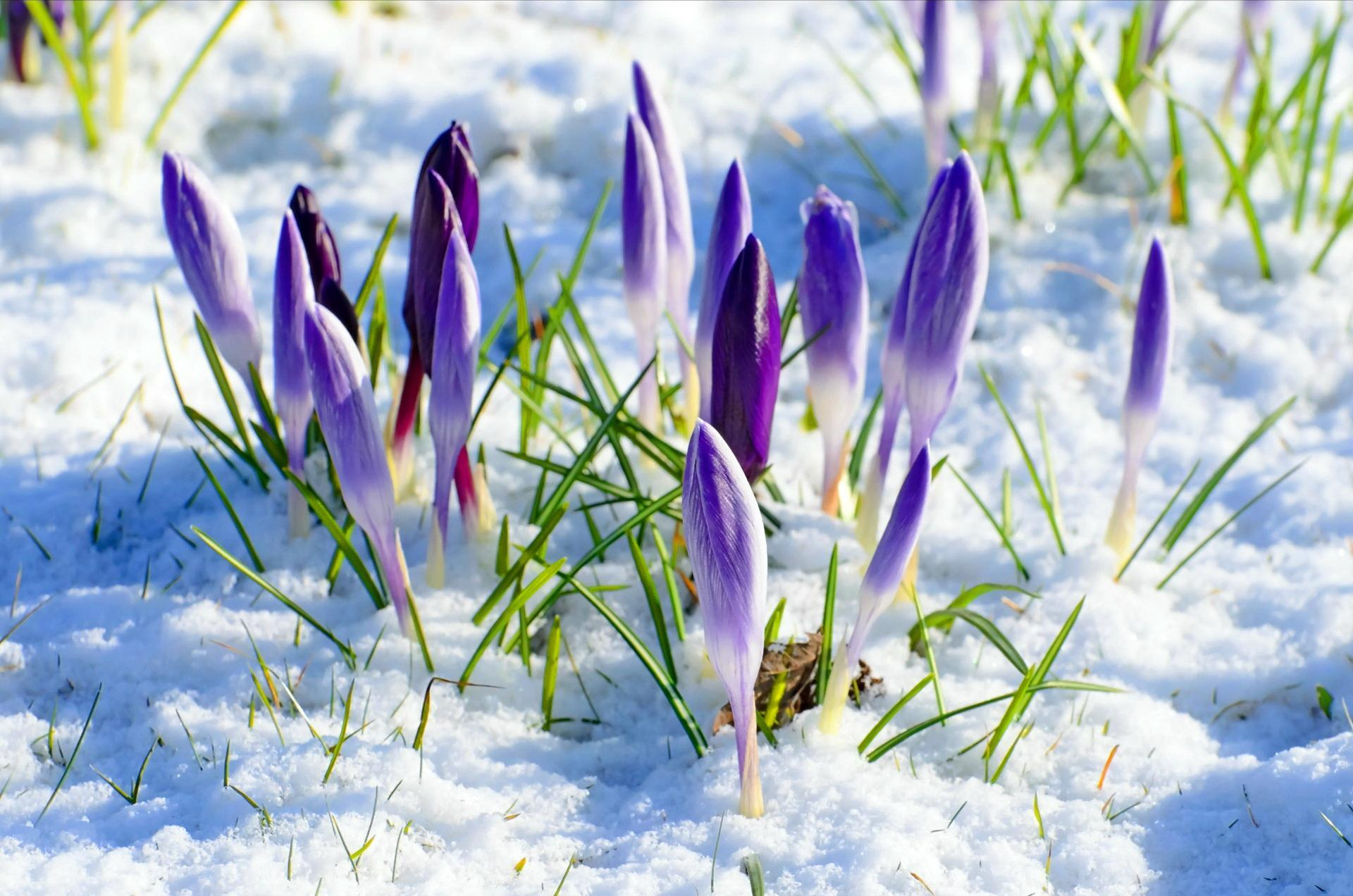 Flowers In Snow Wallpapers Top Free Flowers In Snow
