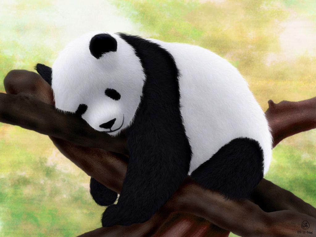Baby Panda Wallpapers Top Free Baby Panda Backgrounds Wallpaperaccess