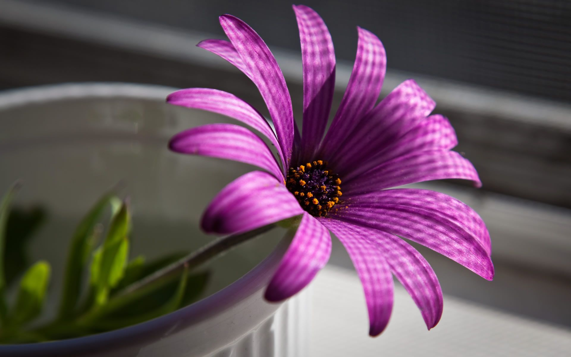 Purple Flower Desktop Wallpapers Top Free Purple Flower Desktop Backgrounds Wallpaperaccess