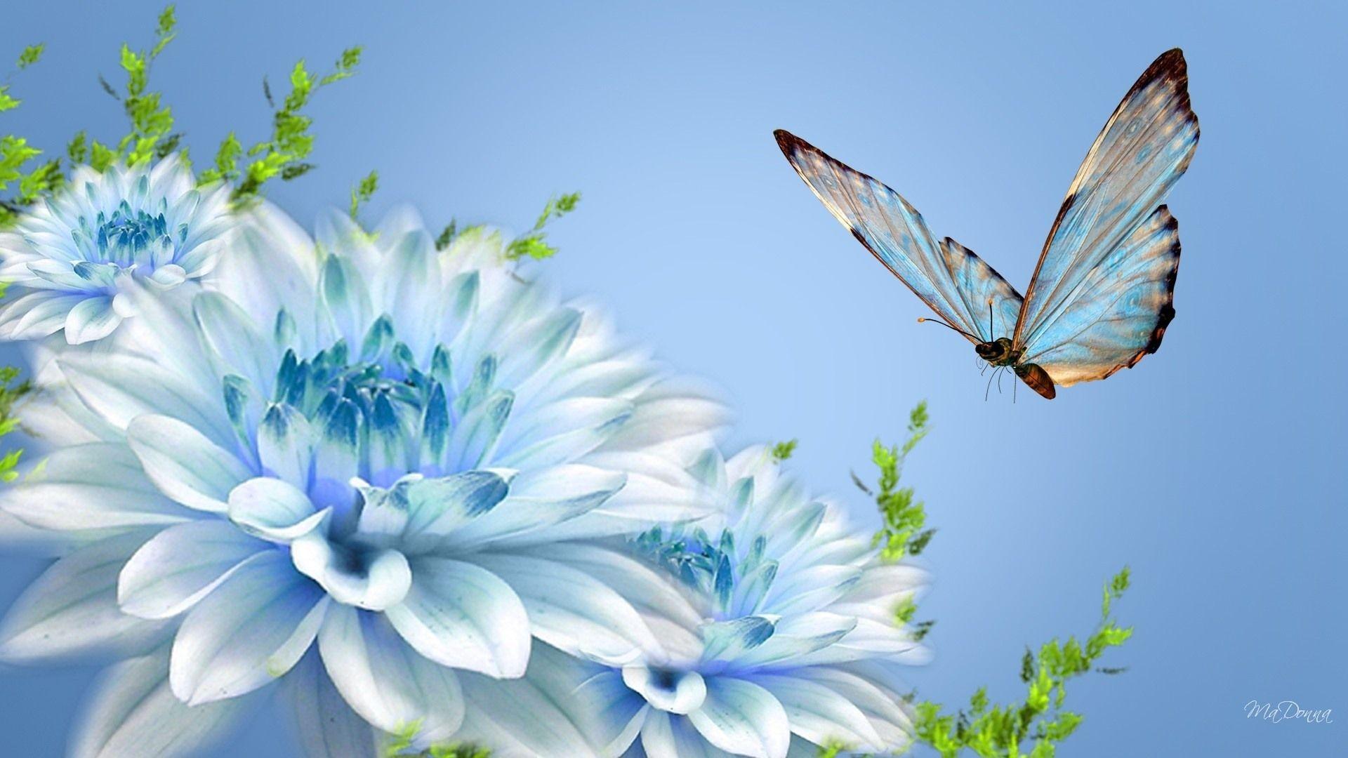Hình nền con bướm đẹp 1920x1080
