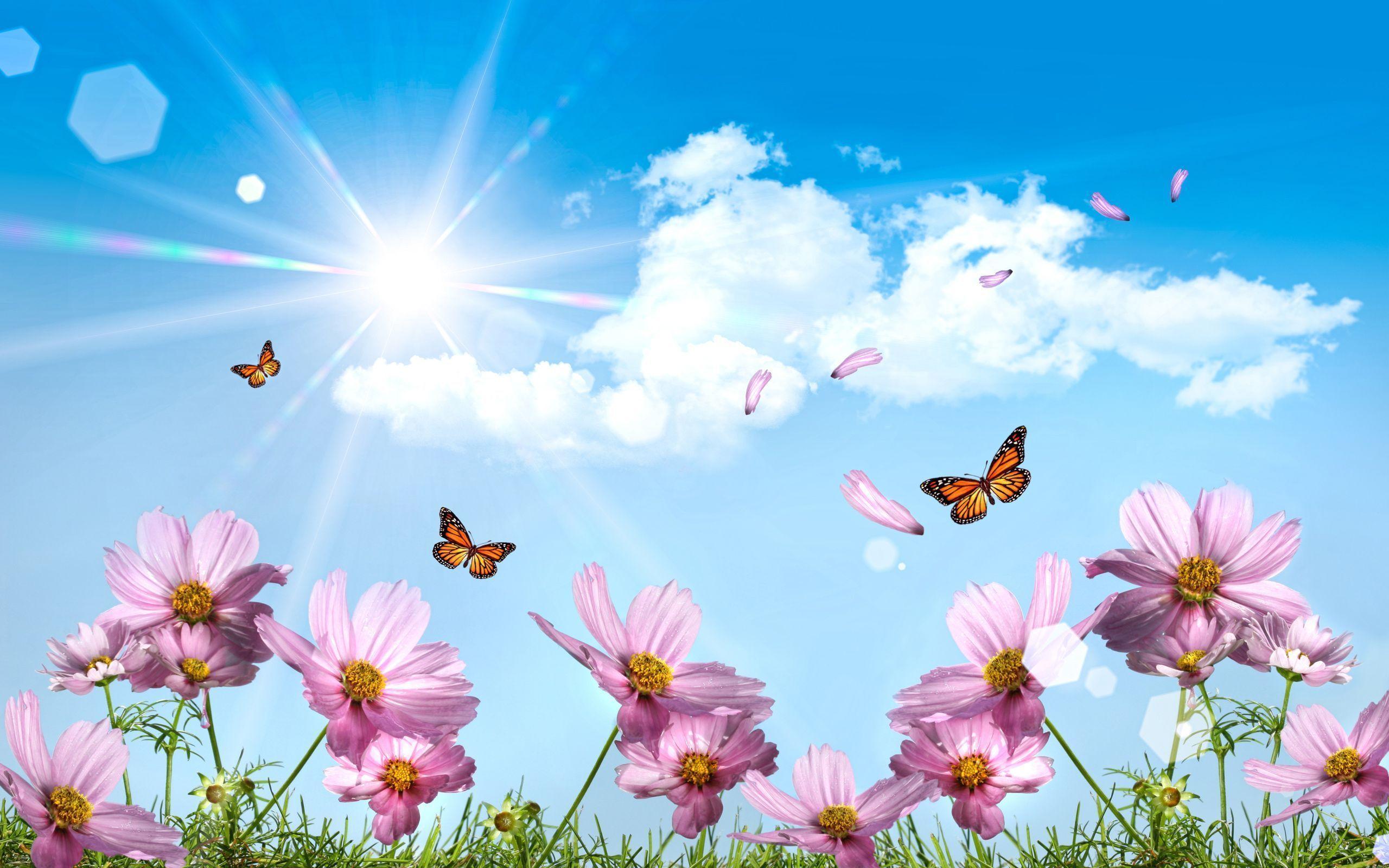 2560x1600 Garrett Wang trong tình yêu của tôi dành cho Bướm.  Hình nền mùa xuân, Hình nền mùa hè, Hình nền bướm