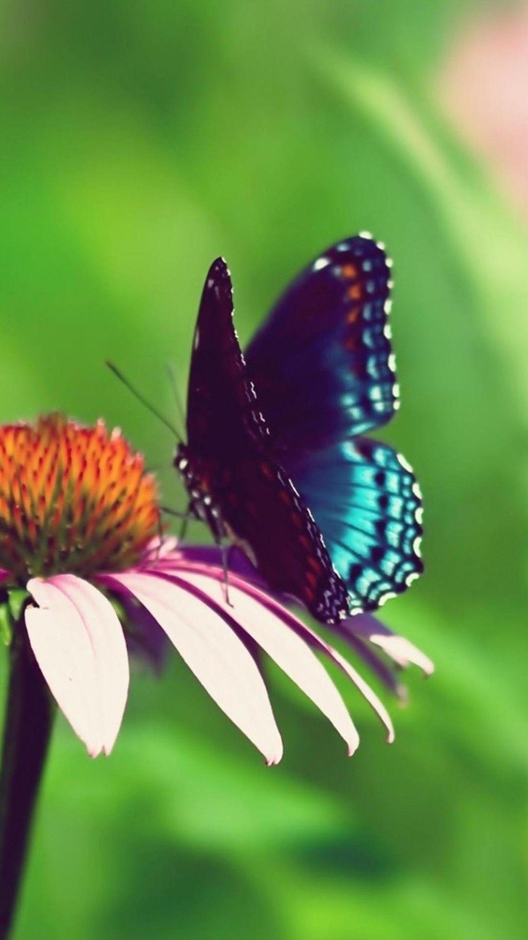 Hình nền con bướm 1080x1920 cho Android - Hoa mùa hè có bướm - Hình nền 1080x1920 - teahub.io