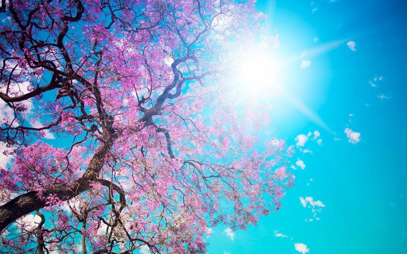 Spring Desktop Wallpapers Top Free Spring Desktop