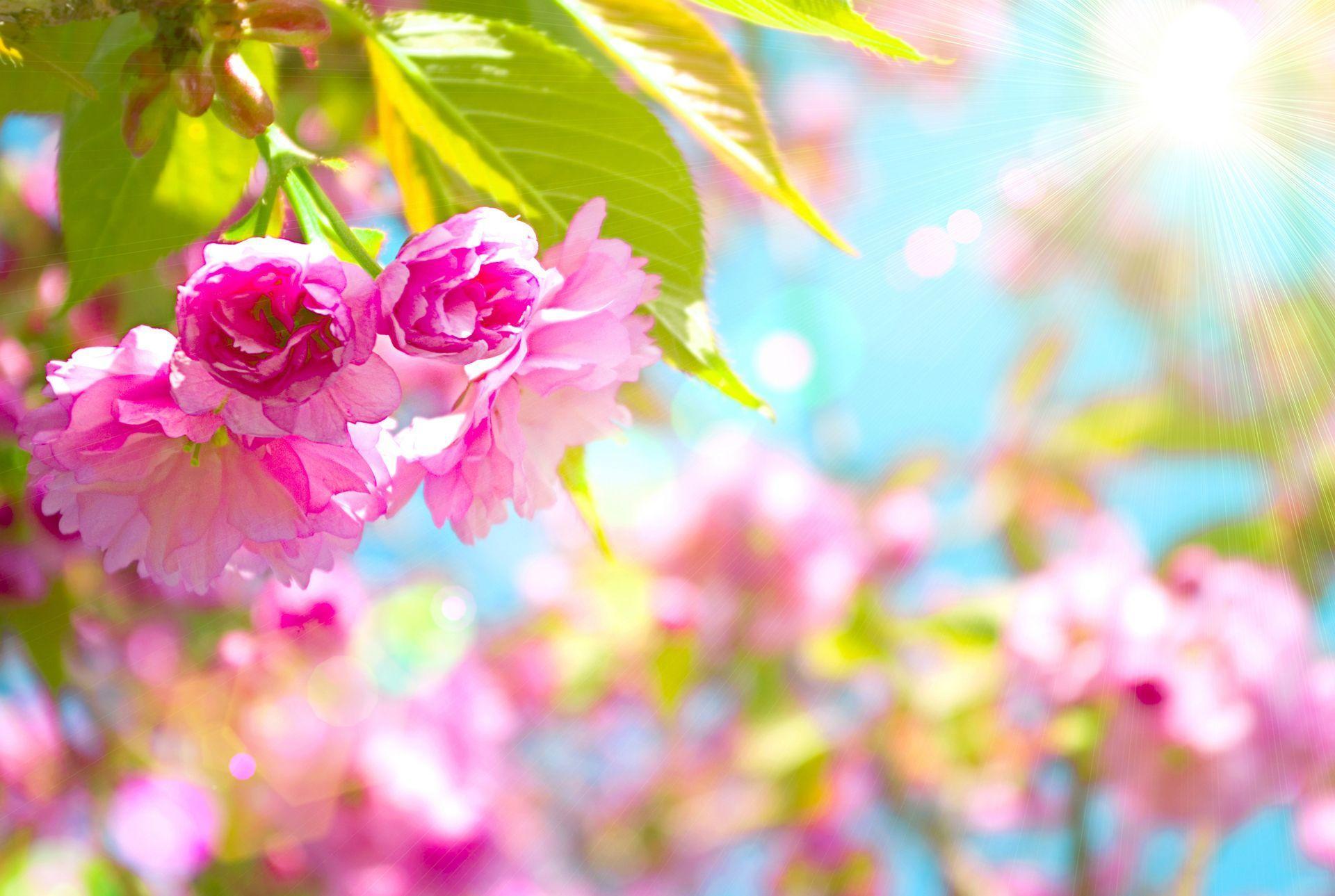 Spring Desktop Wallpapers Top Free Spring Desktop Backgrounds Wallpaperaccess