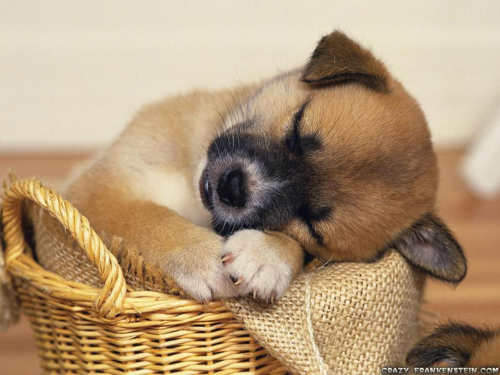 Really Cute Animal Wallpapers - Top ...