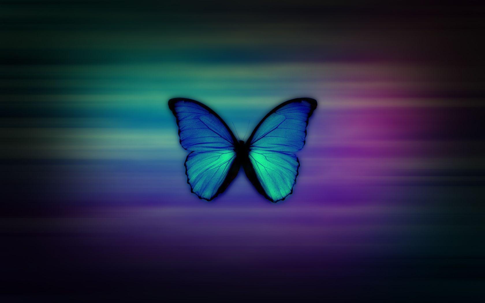 1680x1050 hình nền nữ tính bướm - Tải xuống hình nền tốt nhất