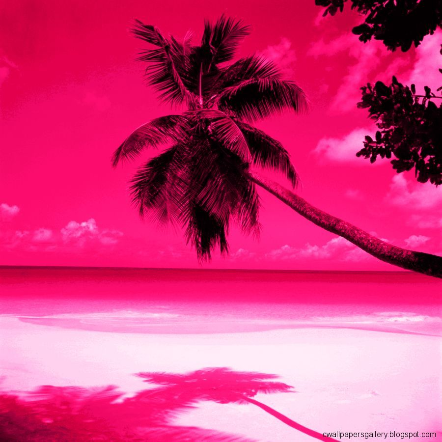 Pink Beach Wallpapers - Top Free Pink Beach Backgrounds