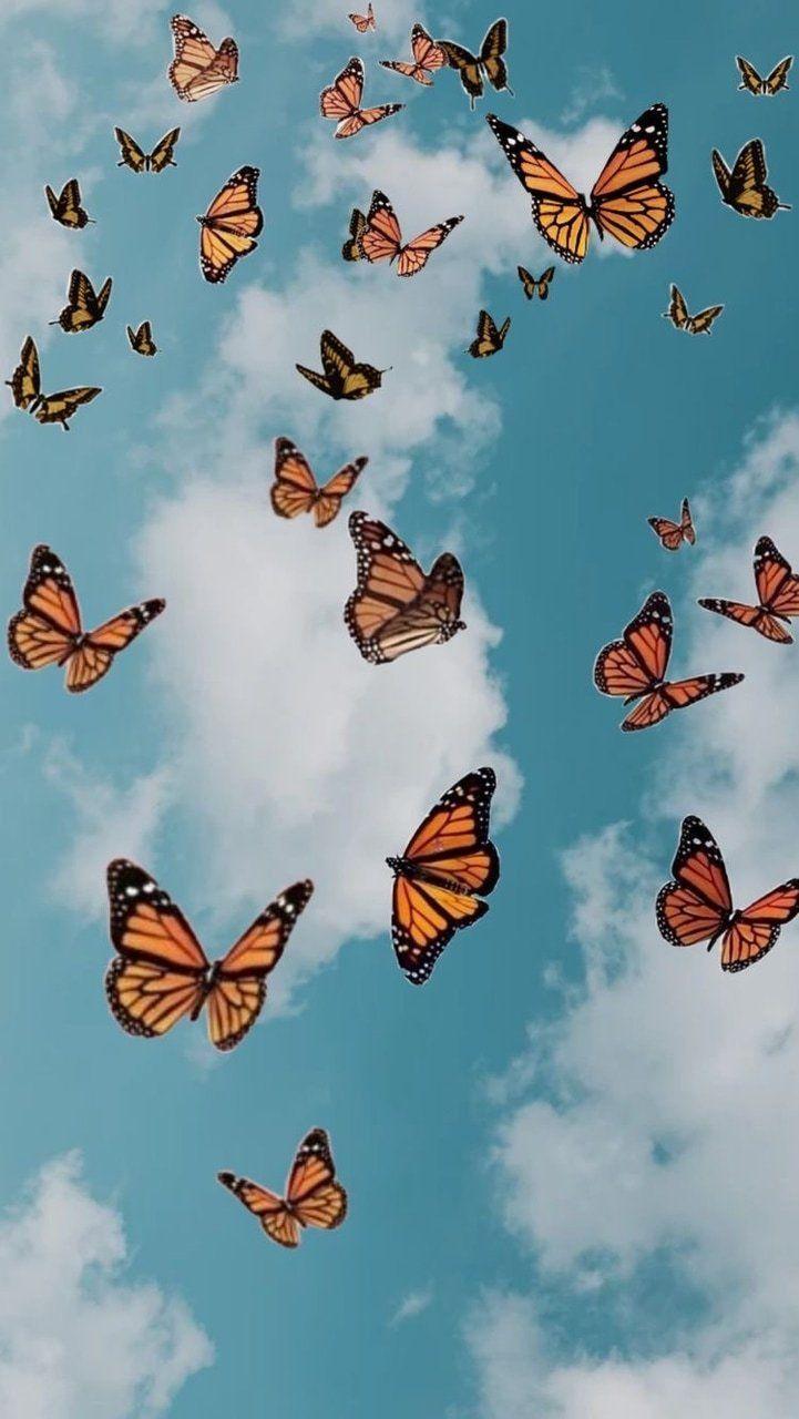 721x1280 Không có tiêu đề.  Hình nền bướm hình nền iphone, Hình nền bướm, Hình nền màu phấn thẩm mỹ