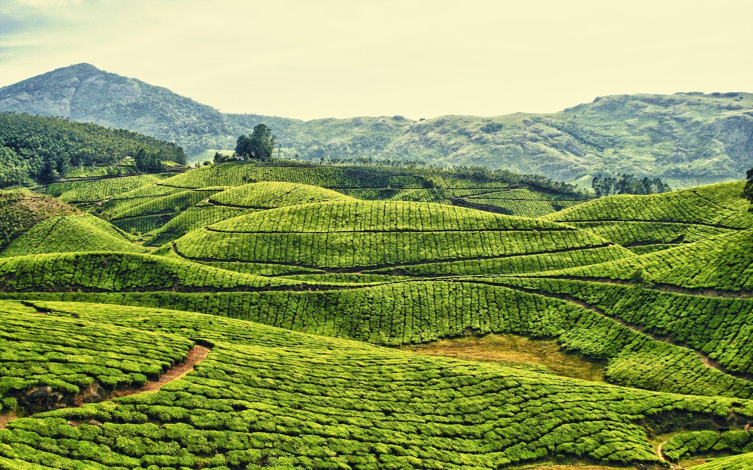 2560x1600 Hình nền hàng ngày: Kodaikanal, Ấn Độ.  Tôi thích lãng phí thời gian của mình