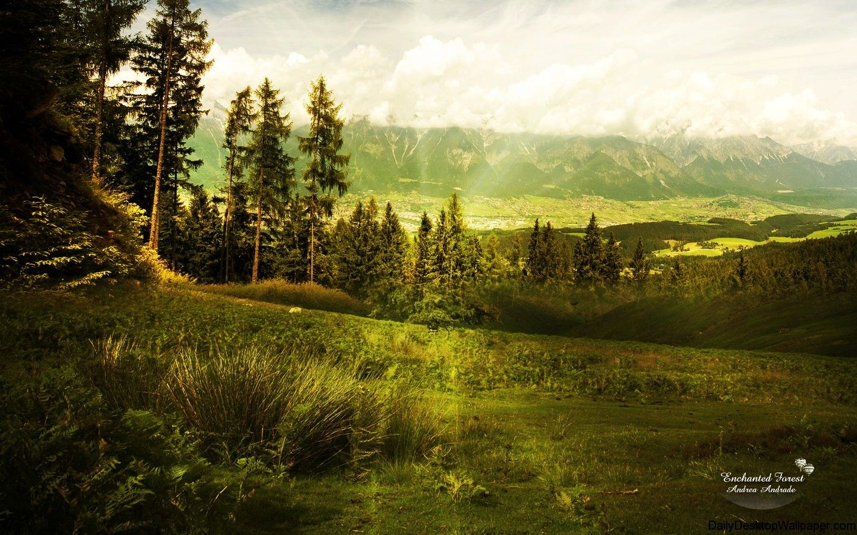 Hình nền độ phân giải cao 1440x900 Khu rừng bị mê hoặc - Độ phân giải cao, Độ phân giải cao Hình nền HD: Độ phân giải cao, Độ phân giải cao Hình nền HD