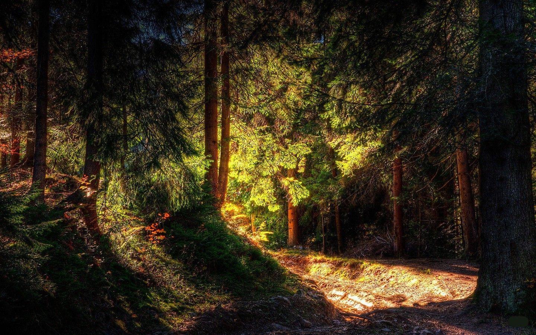 Hình nền thiên nhiên 1440x900 - Rừng, Màu xanh đen.  Tải xuống hình nền HD miễn phí.  Hình nền iPhone, iPad, Android miễn phí