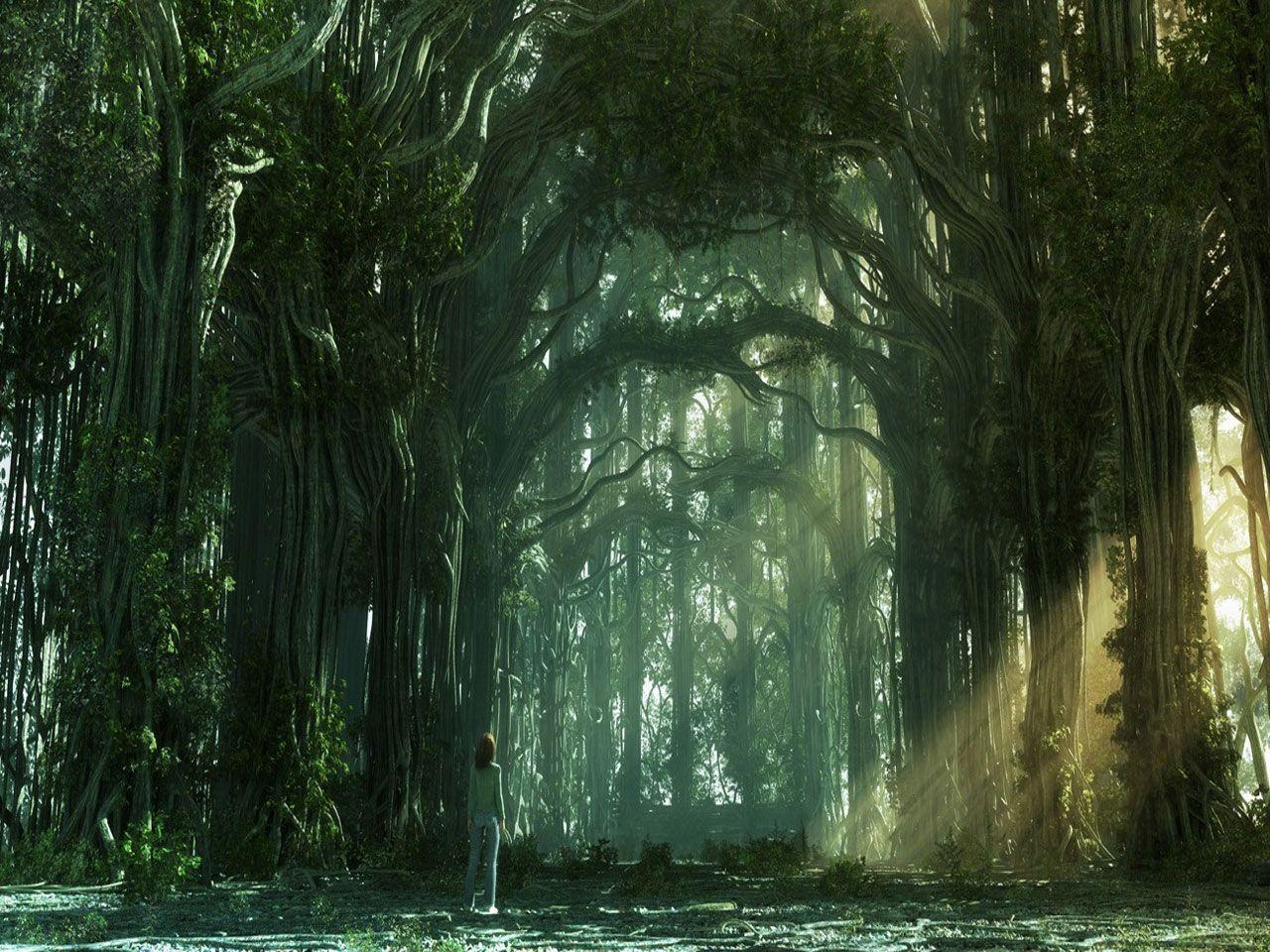 Hình nền rừng 1280x960 - Bing Bilder.  Khu rừng tưởng tượng, Nền tưởng tượng, Hình nền rừng
