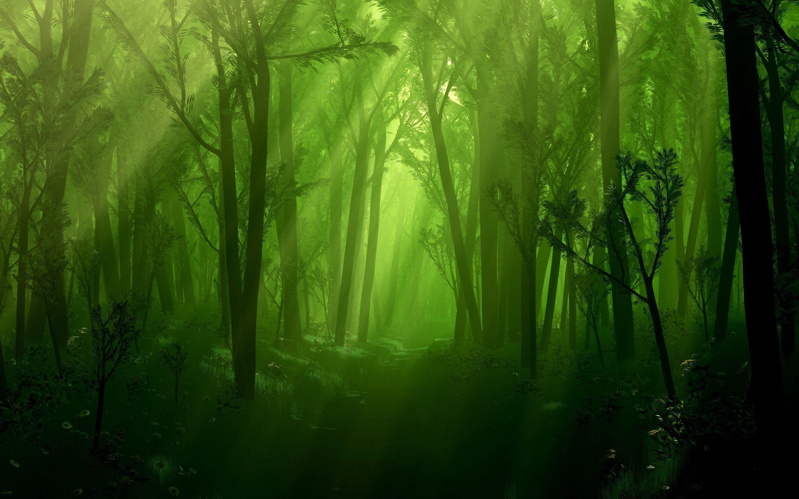2560x1600 Khu rừng bị mê hoặc tối tăm