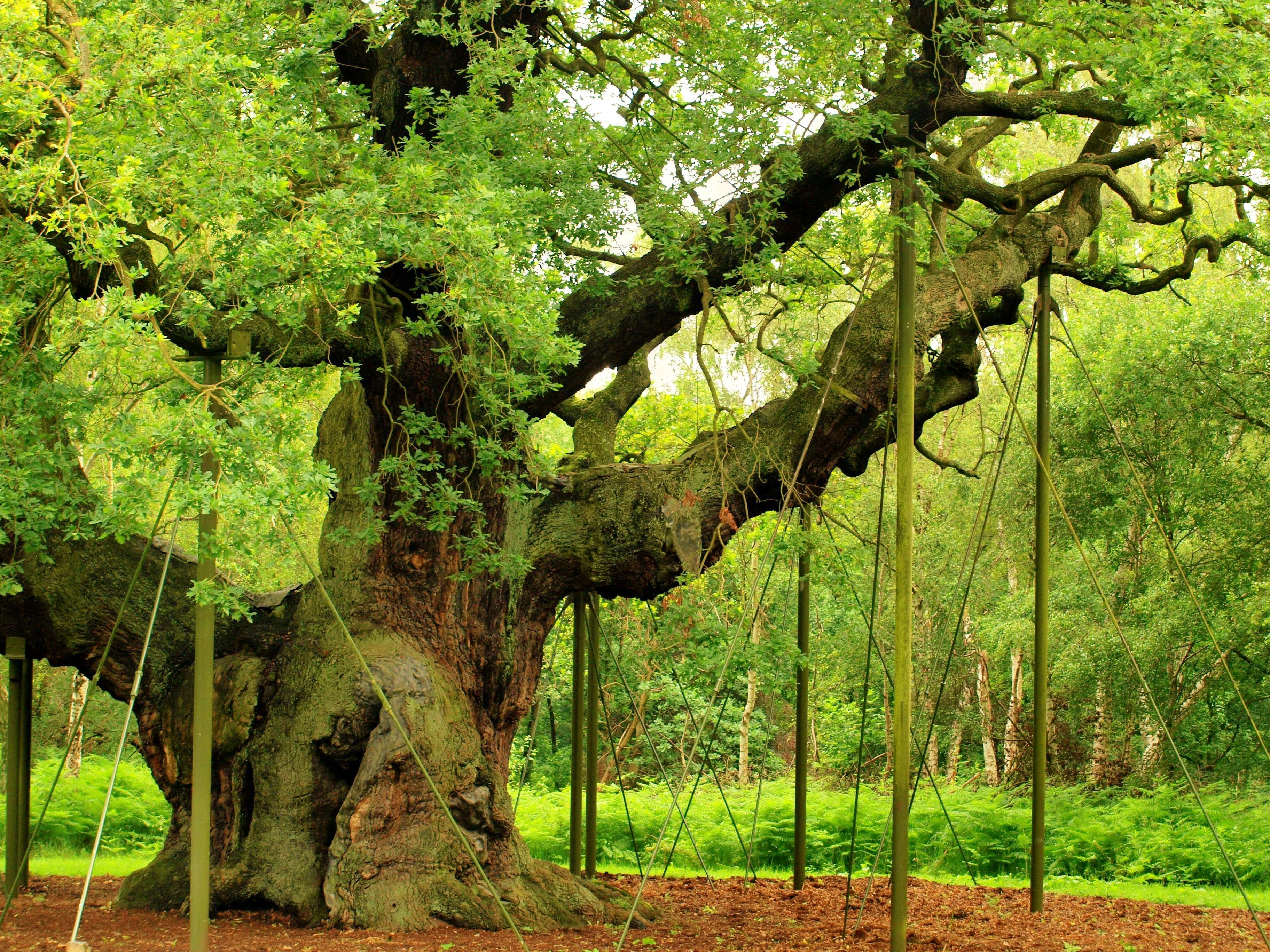 3648x2736 Nền Rừng Sherwood.  Hình nền rừng đẹp, Hình nền rừng tuyệt vời và Hình nền rừng mùa thu