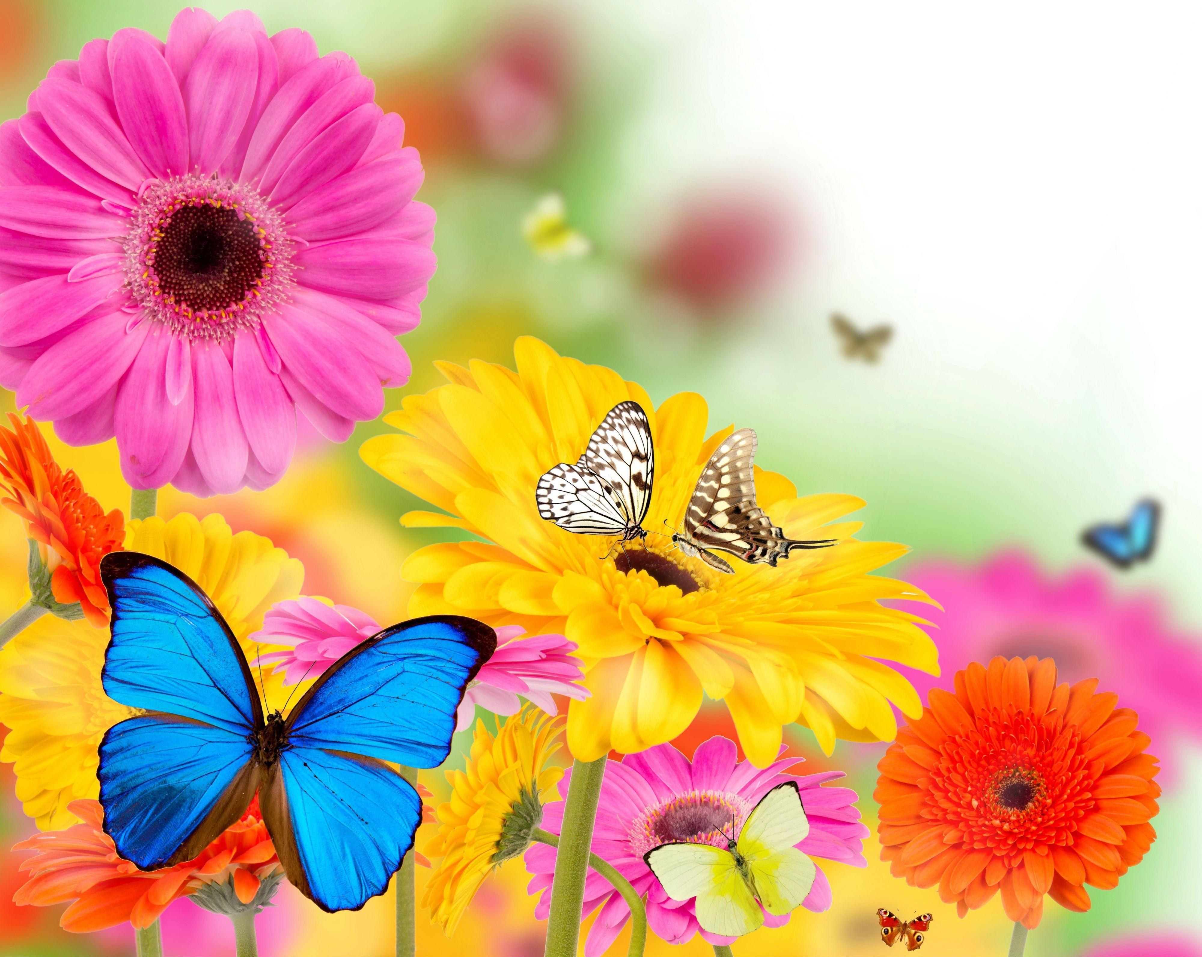 4000x3183 Butterfly Summer Desktop Theme (Trang 1)