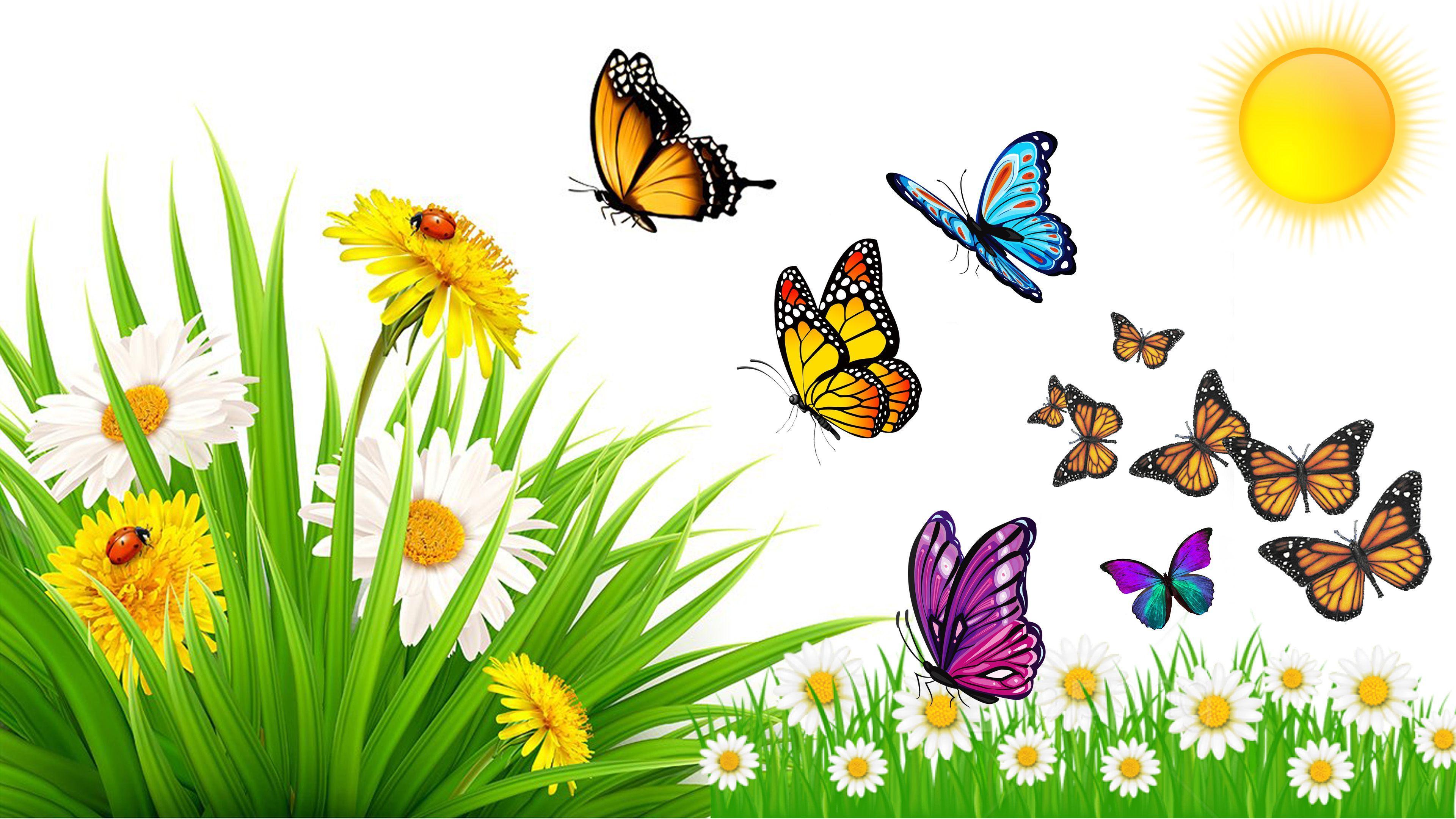 3840x2160 Thiên nhiên Đồng cỏ Mùa hè Côn trùng Bọ rùa Bọ cánh cứng Bướm trong chuyến bay Hoa dại Hoa từ lạc đà và bồ công anh Hình nền cực HD 4k cho máy tính để bàn 3840x2160