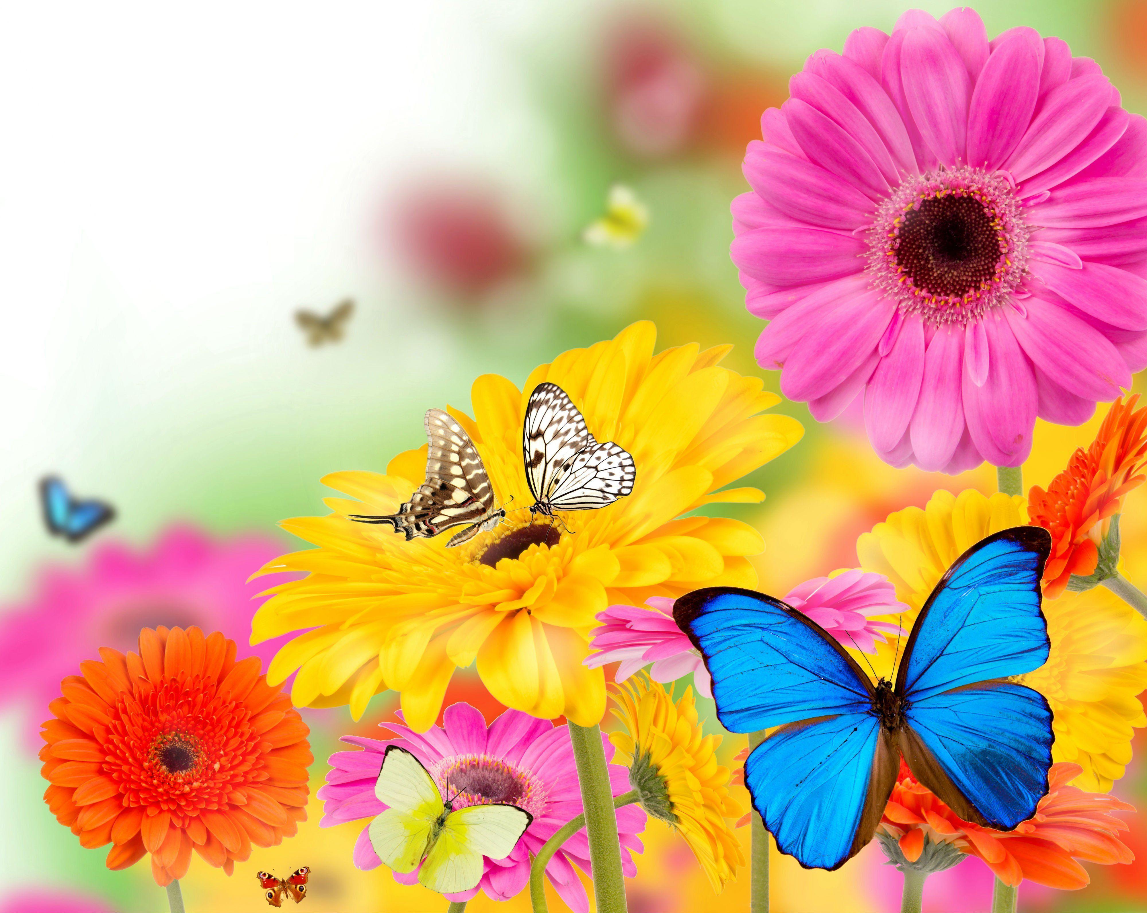 Hình nền con bướm mùa hè 4000x3183