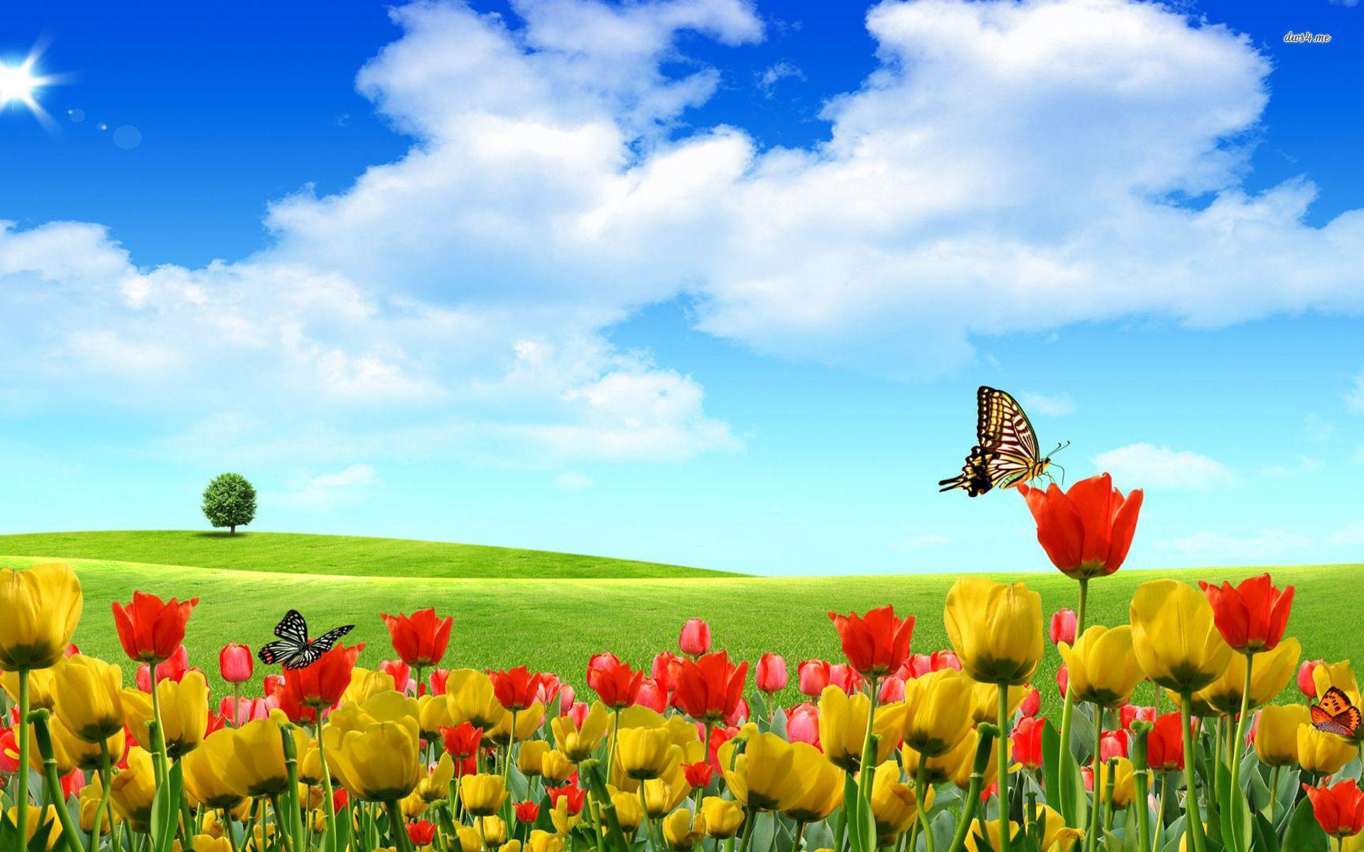 Hình nền thiên nhiên bướm xuân 1920x1200