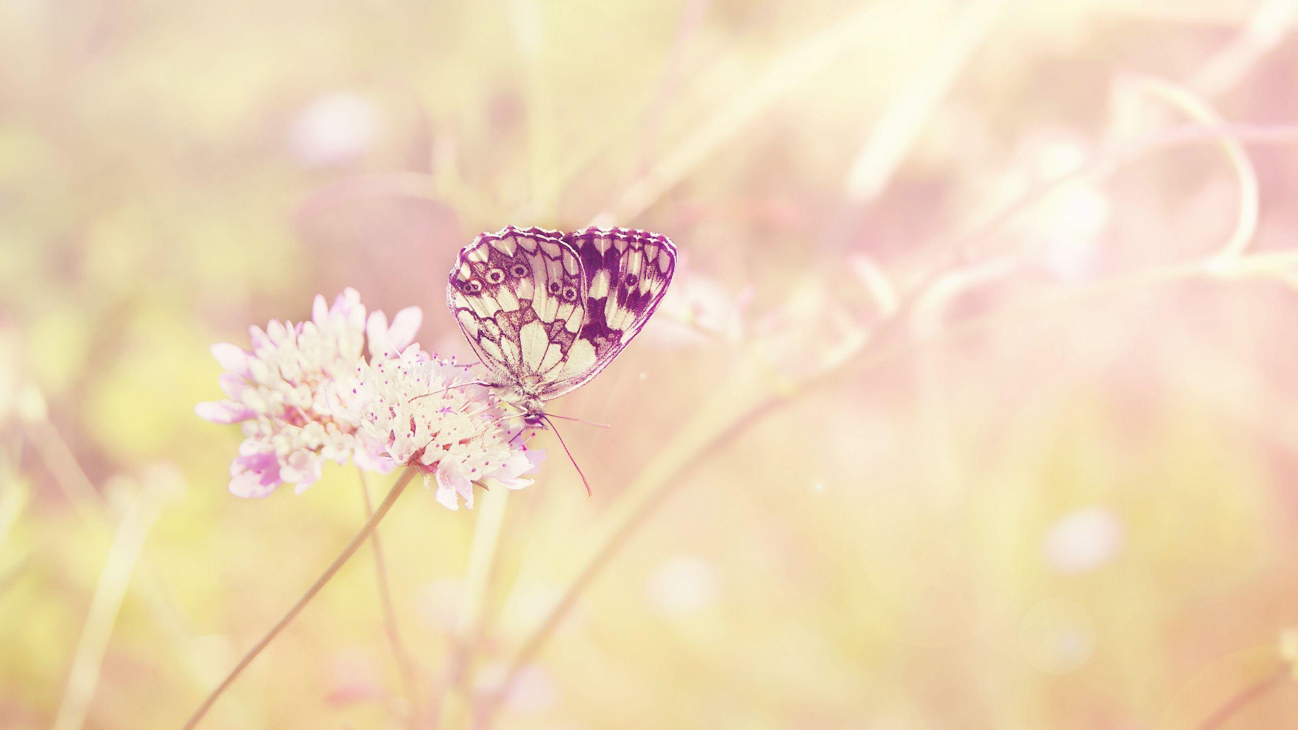 2560x1440 Tải xuống hình nền 2560x1440 bướm, mùa hè, côn trùng, cánh đồng, thực vật, ánh sáng, mặt trời, màu sắc, hoa màn hình rộng 16: 9 nền HD