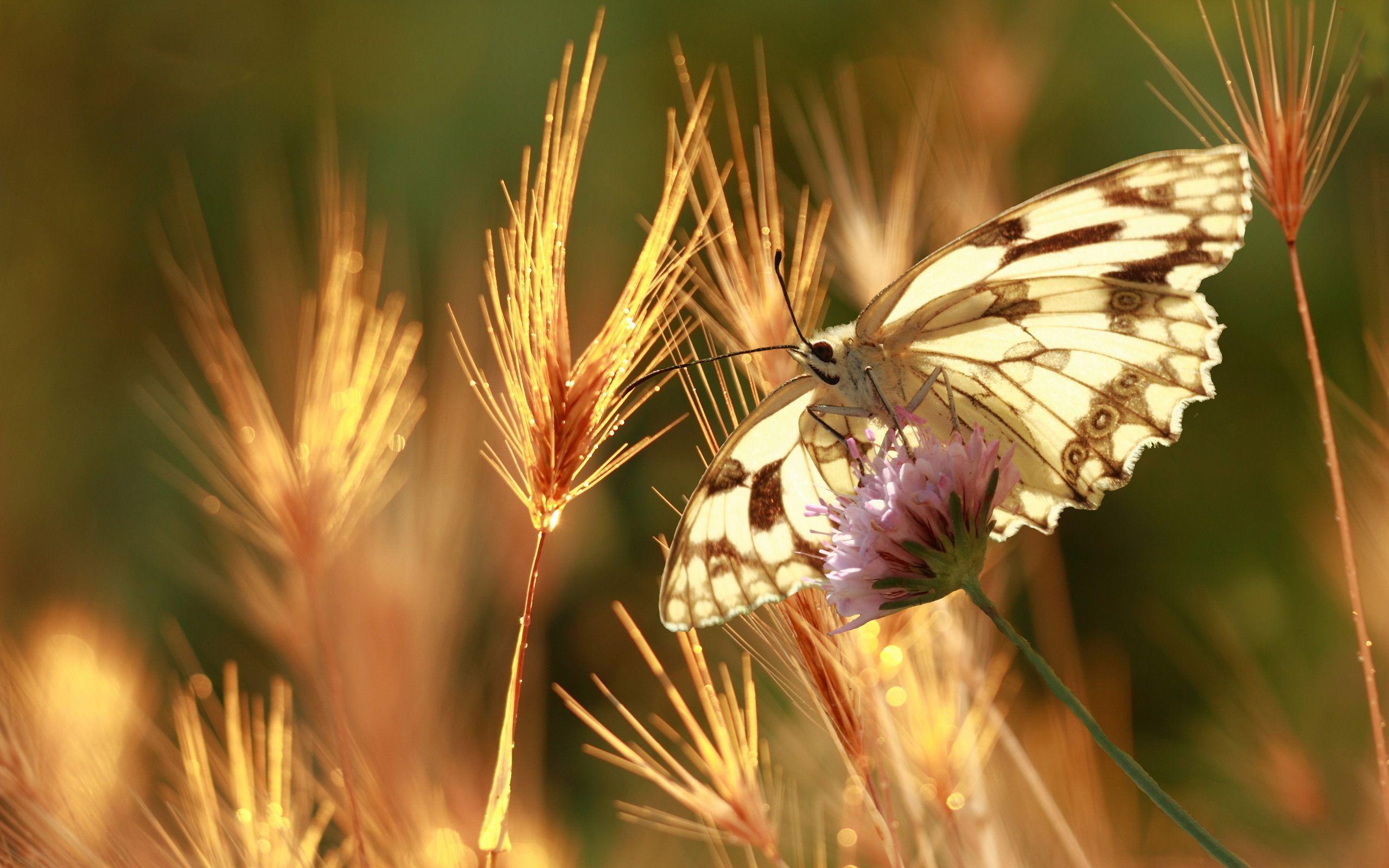 Con bướm 2560x1600, Mùa hè, Thiên nhiên, Vĩ mô, Bokeh Hình nền có độ phân giải cao / Nền máy tính để bàn và di động