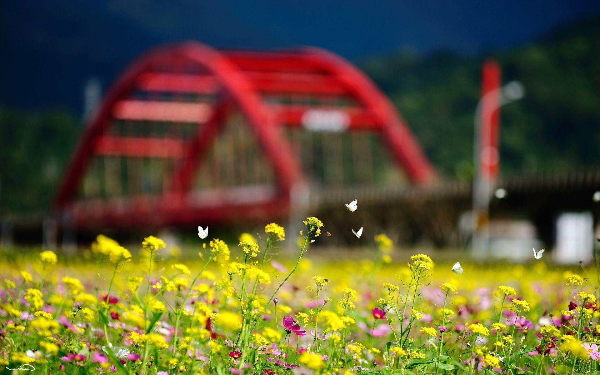 Hoa và bướm mùa hè 1920x1200 - Hình nền 1920x1200 - teahub.io