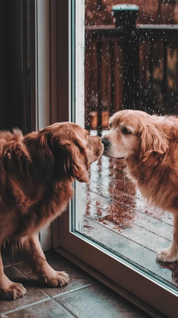 Aesthetic Dogs Wallpapers Top Free Aesthetic Dogs Backgrounds Wallpaperaccess