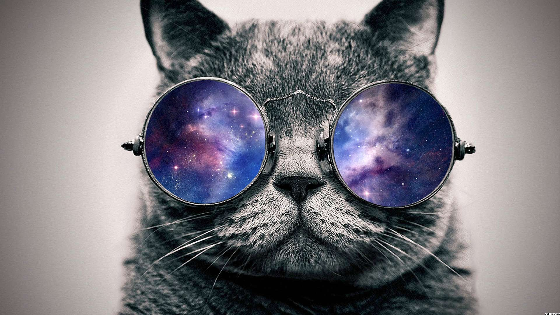 Cat With Sunglasses Wallpapers Top Free Cat With Sunglasses Backgrounds Wallpaperaccess