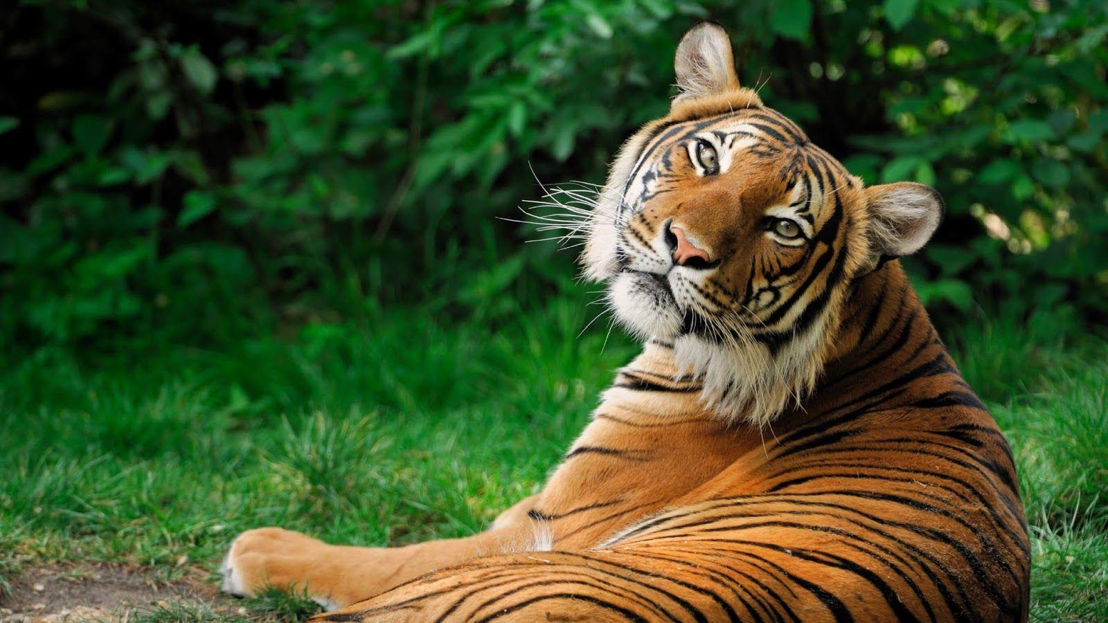 8K Ultra HD Animal Wallpapers - Top Free 8K Ultra HD Animal