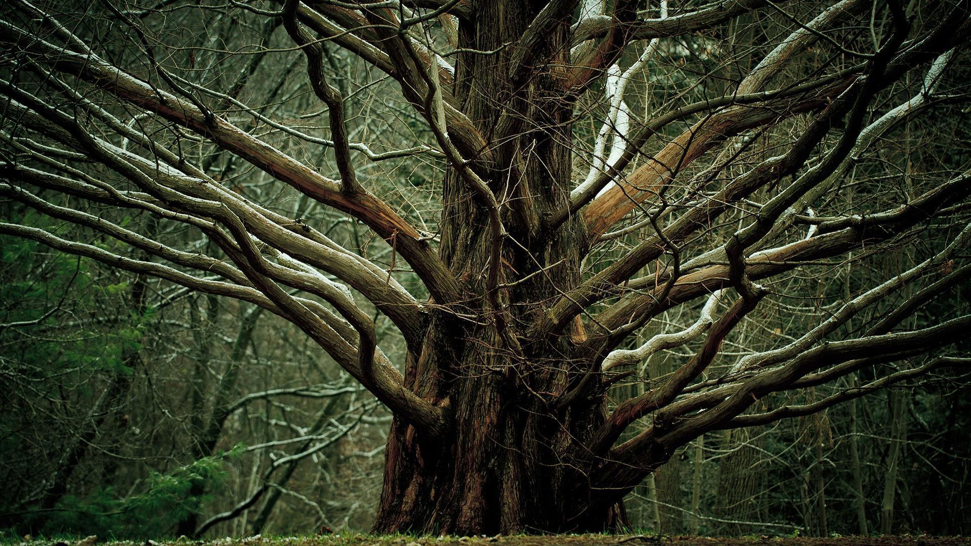 8k Giant Tree Wallpapers Top Free 8k Giant Tree