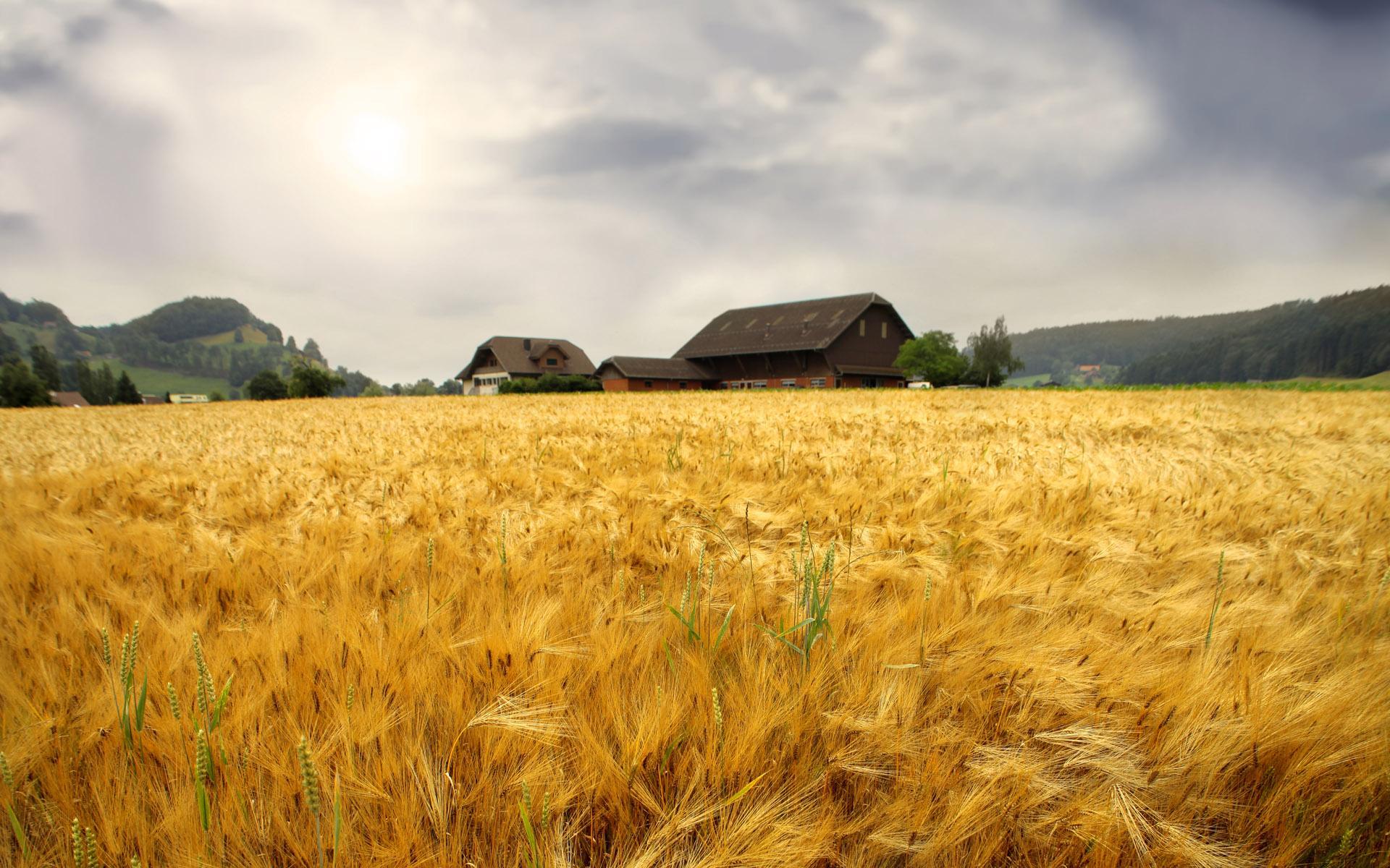 Hình nền nông dân 1920x1200