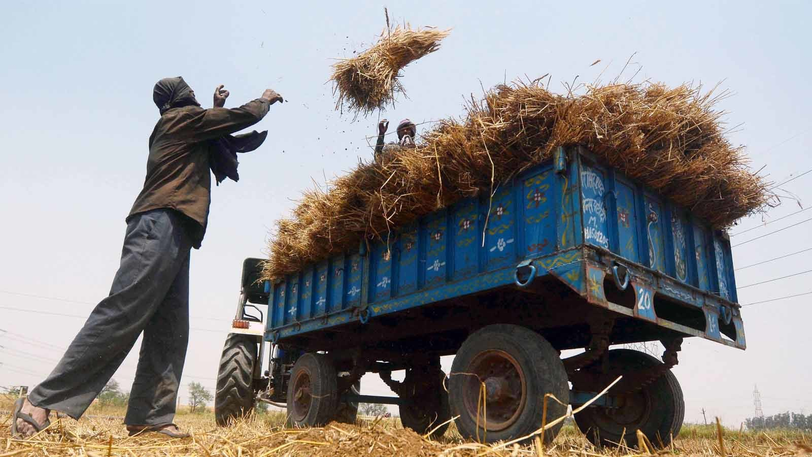 1600x900 Farm Bill là gì và tại sao nông dân sợ mất MSP theo luật mới: Giải thích - Times of India