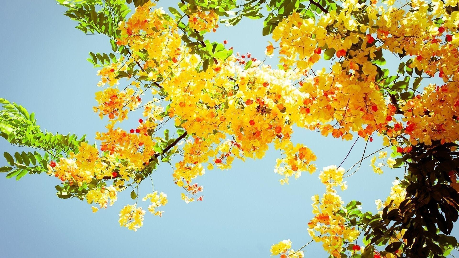 Yellow aesthetic computer wallpapers top free yellow - Nature wallpaper aesthetic ...