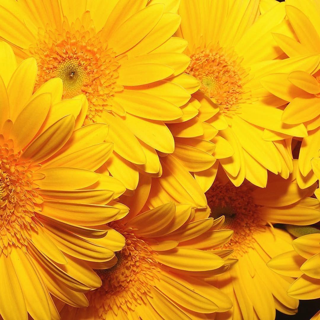 Yellow Aesthetic Desktop Wallpapers - Top Free Yellow ...