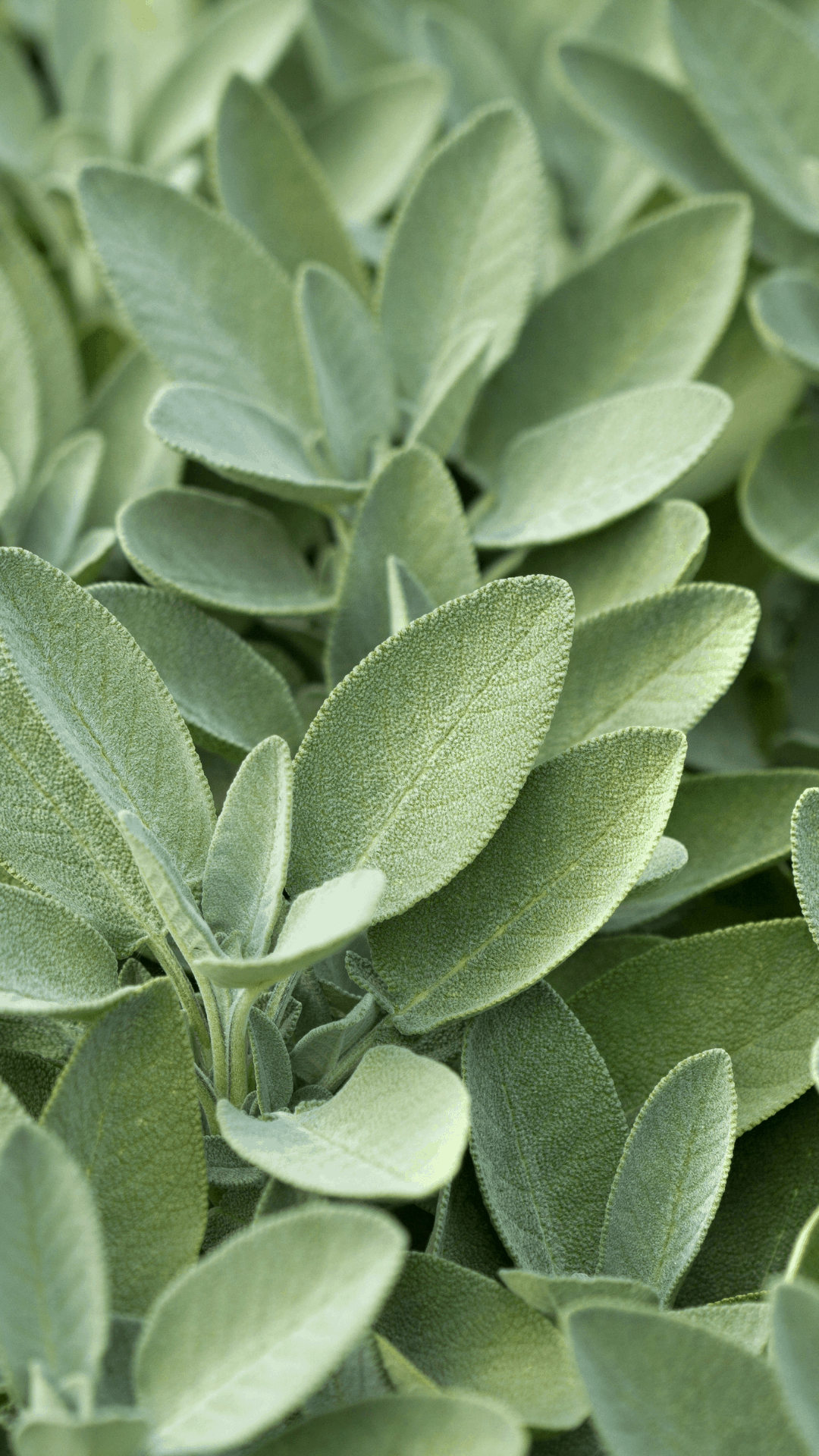 1080x1920 Sage Green Aesthetic hình nền