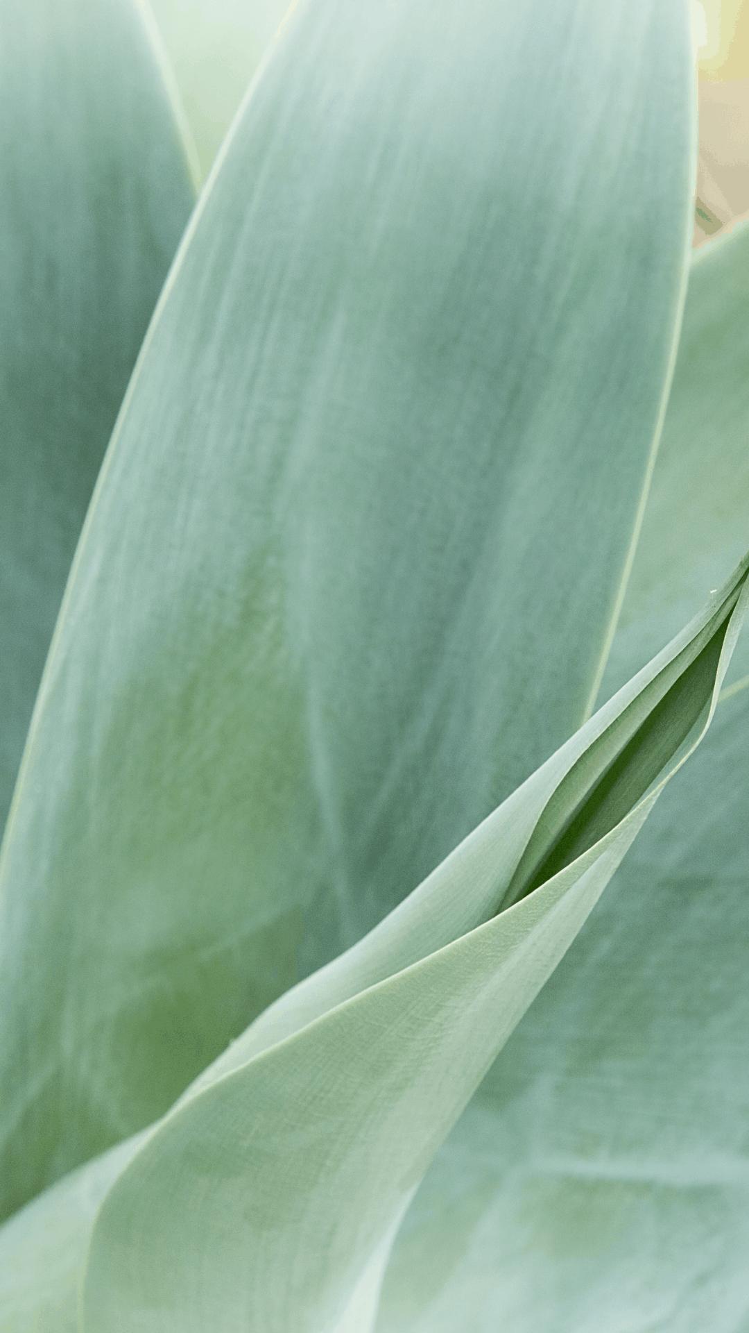 1080x1920 Sage Green Aesthetic Wallpaper Plants - Novocom.top