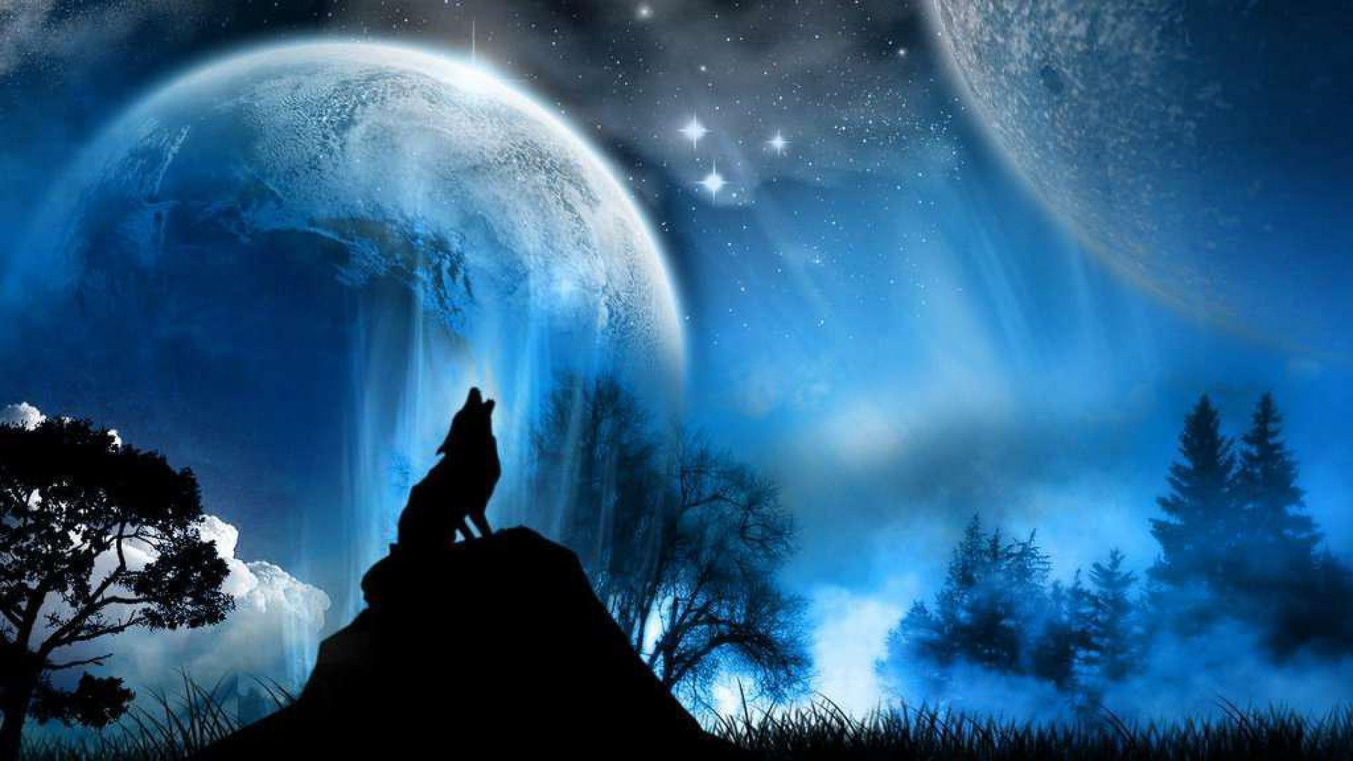 Beautiful Wolf Wallpapers Top Free Beautiful Wolf Backgrounds Wallpaperaccess