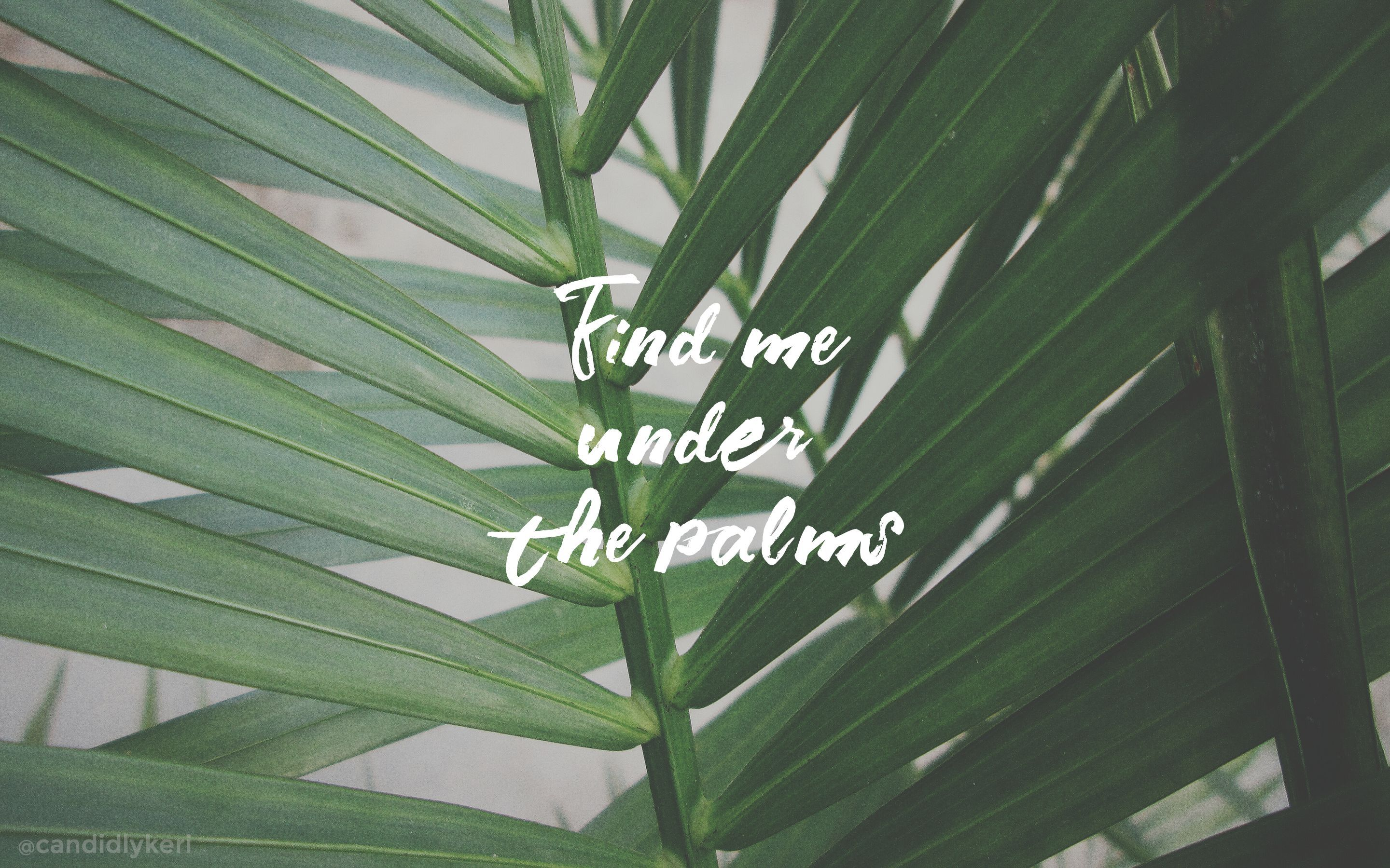 Palm Desktop Wallpapers Top Free Palm Desktop Backgrounds Wallpaperaccess We offer an extraordinary number of hd images that will instantly freshen up your smartphone. palm desktop wallpapers top free palm