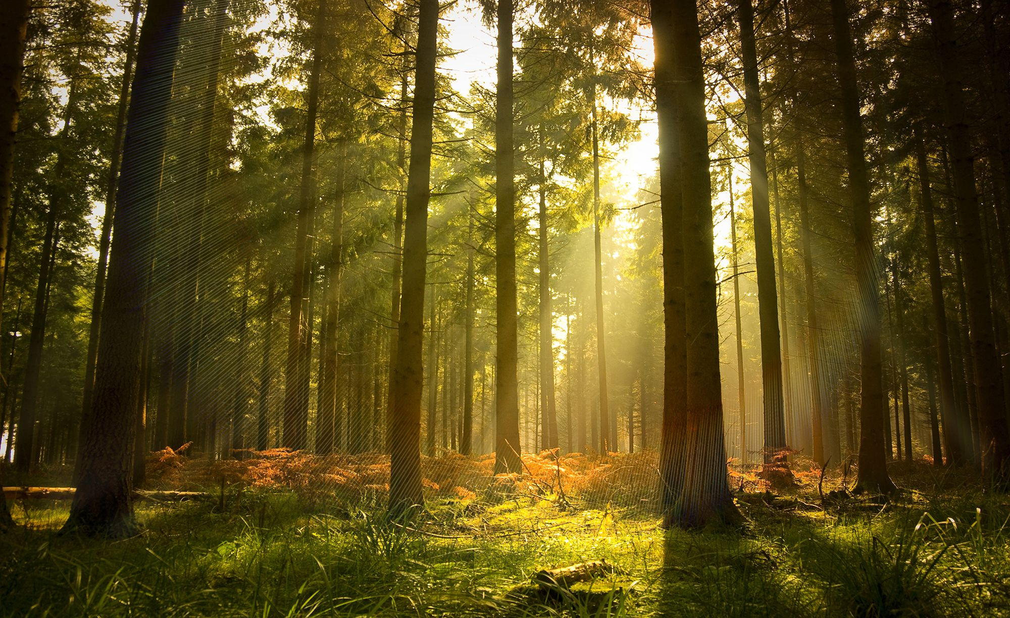 Forest Scene Wallpapers Top Free Forest Scene Backgrounds Wallpaperaccess