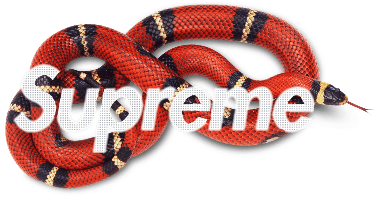 Supreme Gucci Snake Wallpapers - Top Free Supreme Gucci Snake Backgrounds - WallpaperAccess