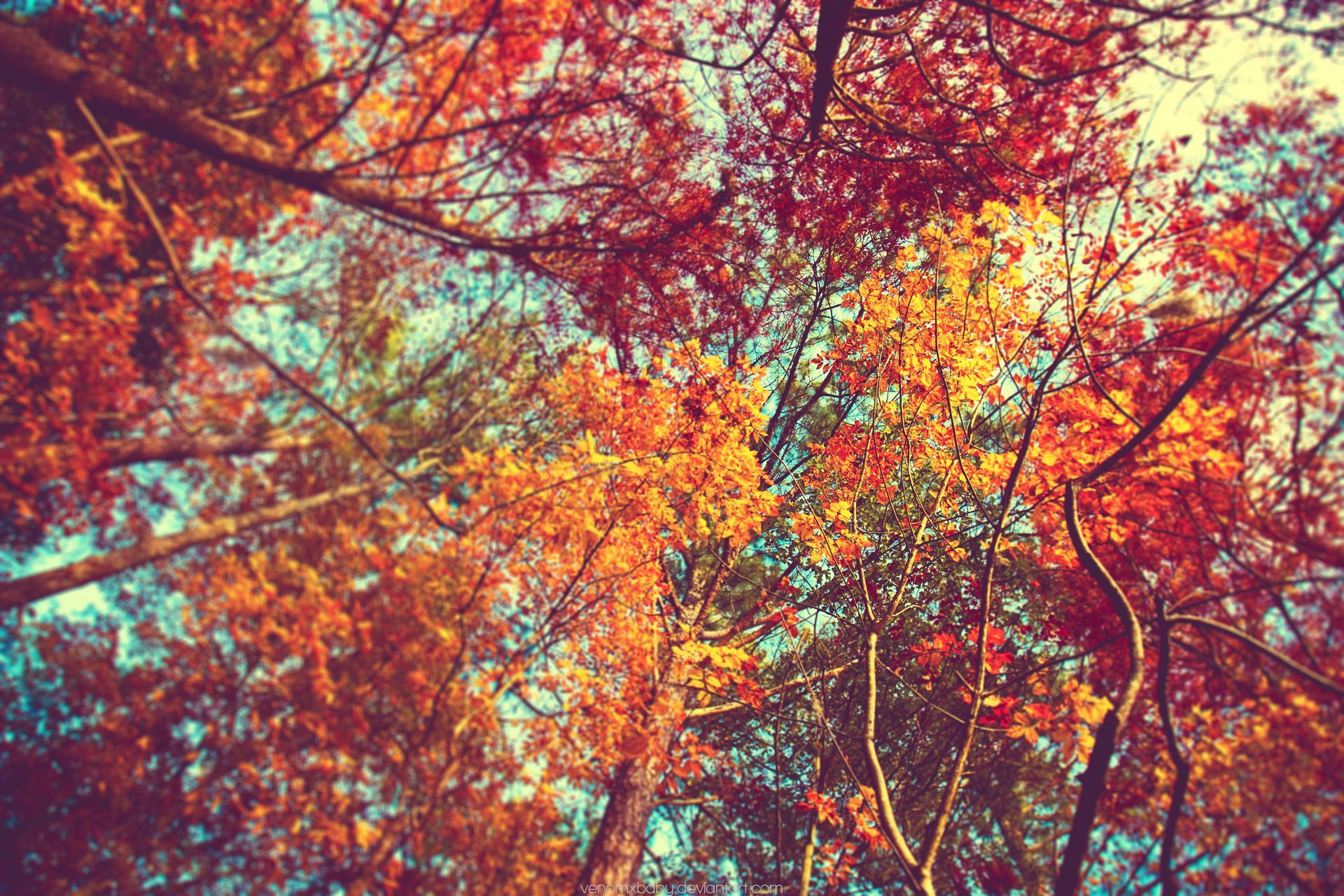 Tumblr Autumn Desktop Wallpapers Top Free Tumblr Autumn Desktop Backgrounds Wallpaperaccess